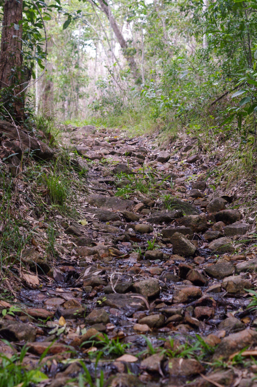 Dalrymple Gap Walking Track road