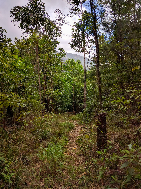 Dalrymple Gap Walking Trail