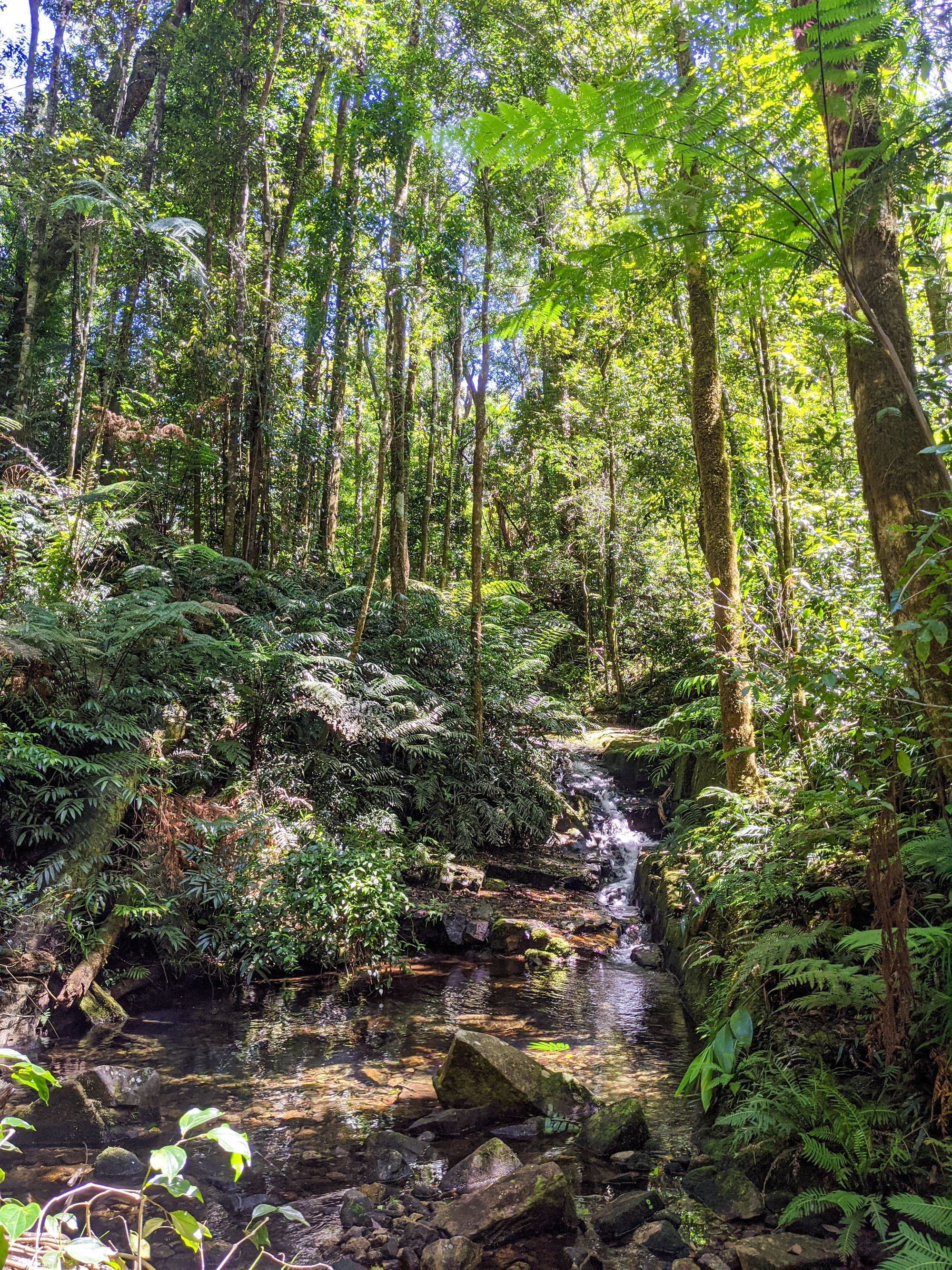 bullocky toms creek paluma range