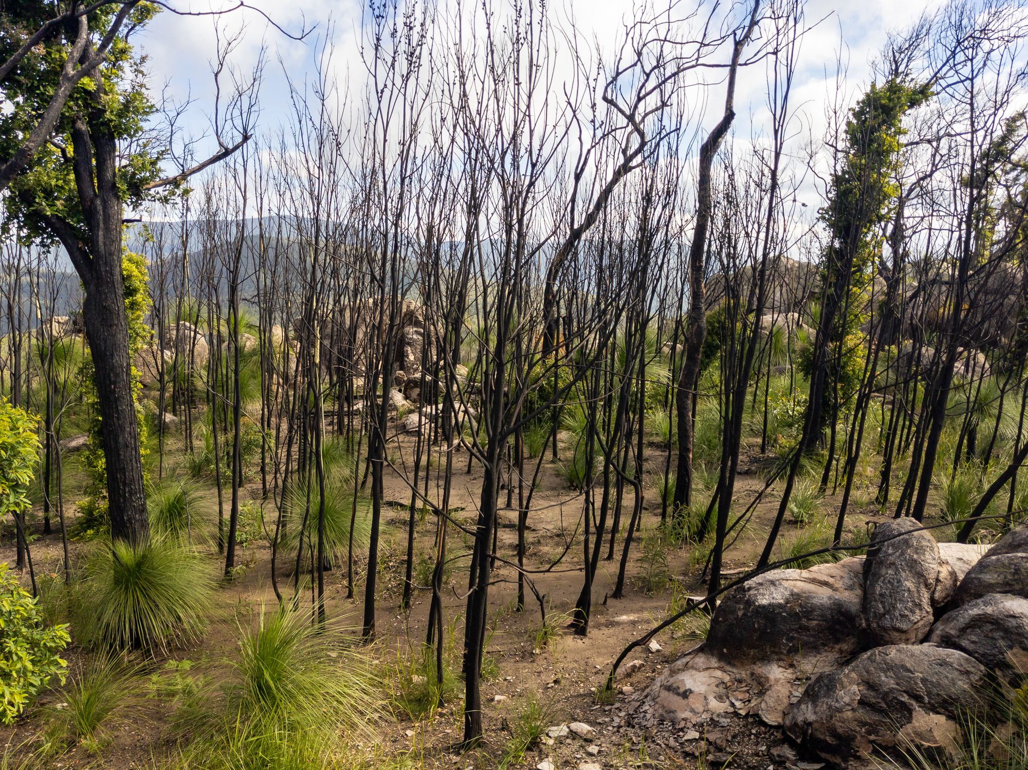 burn off trees mt storth