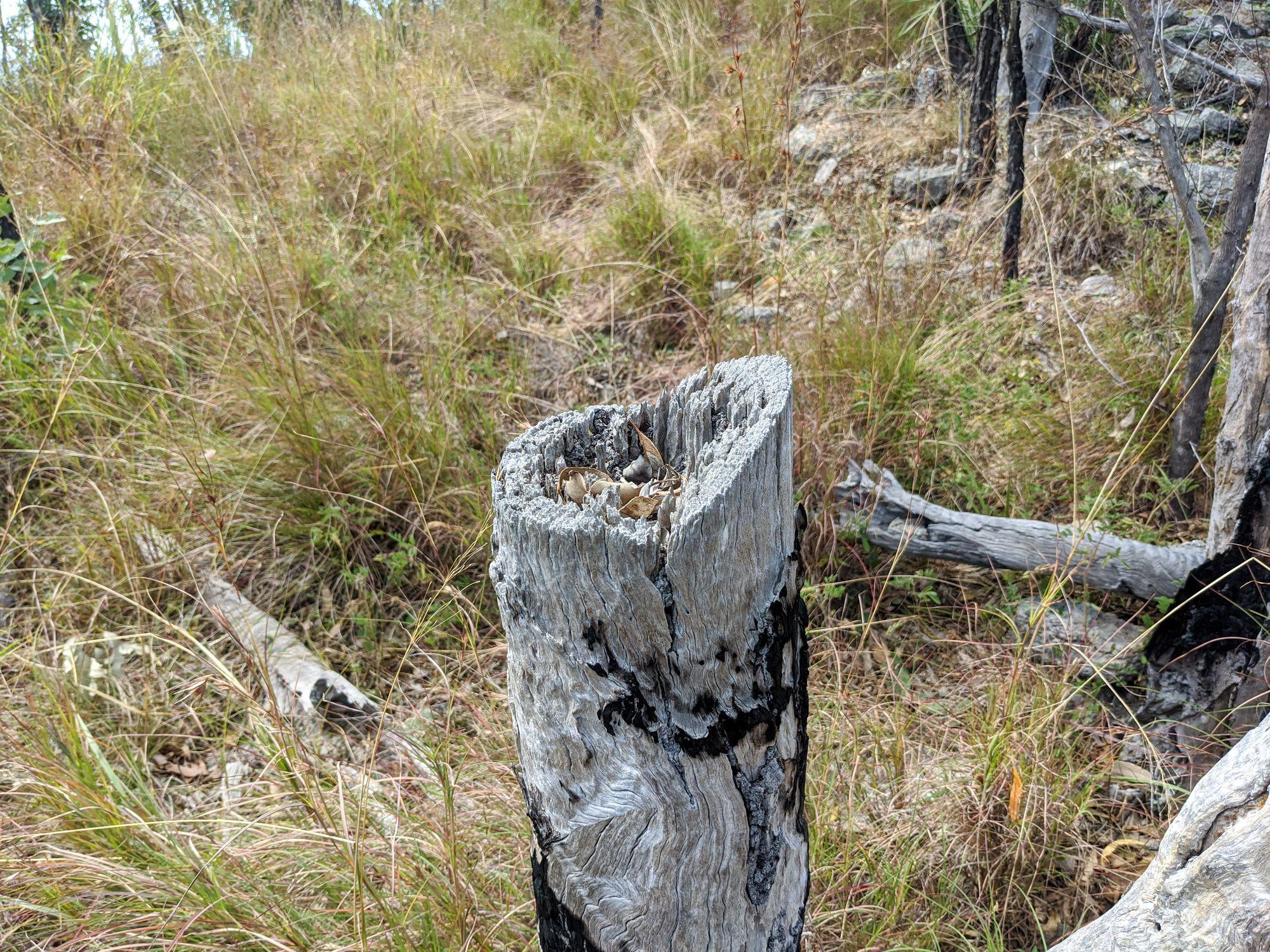 east sister tree cut