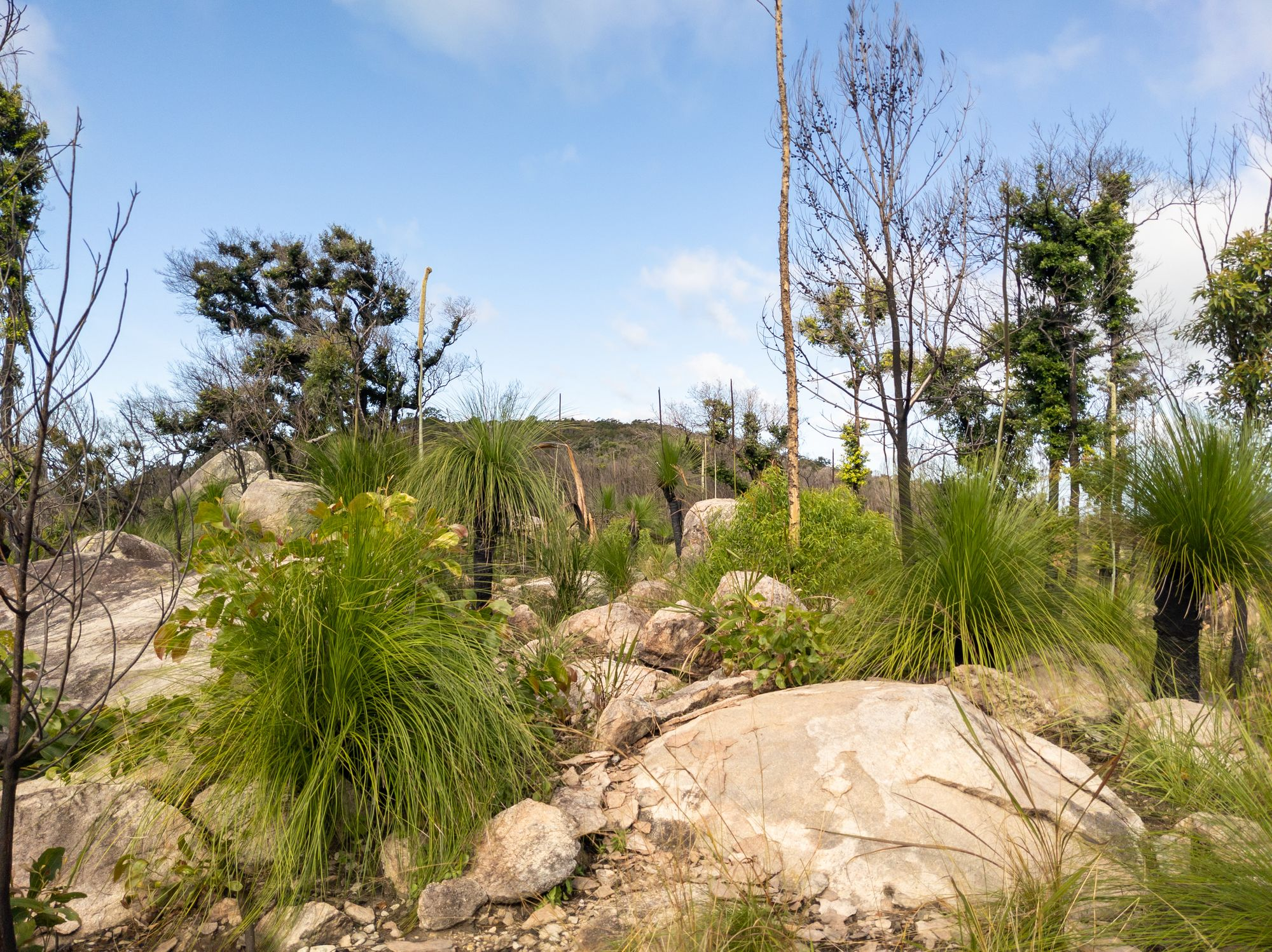rocky bushland mt storth