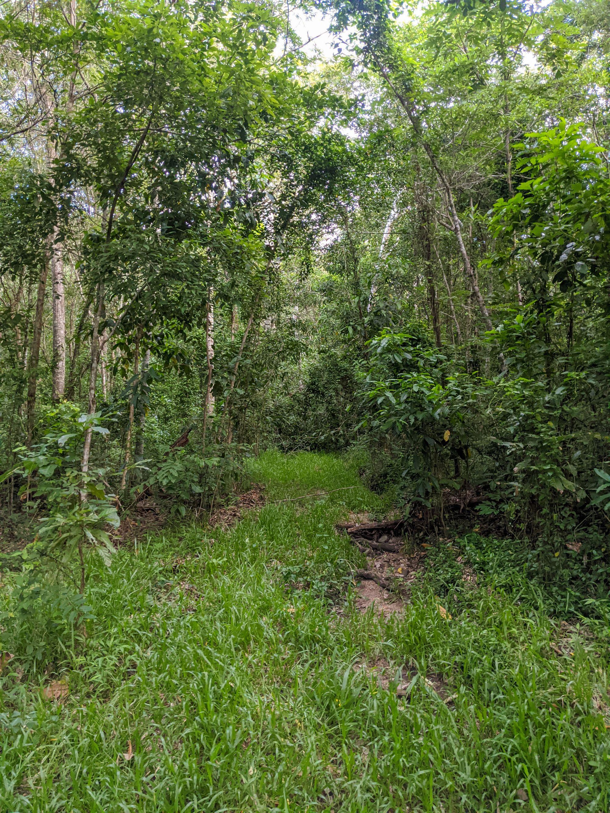 roly creek track