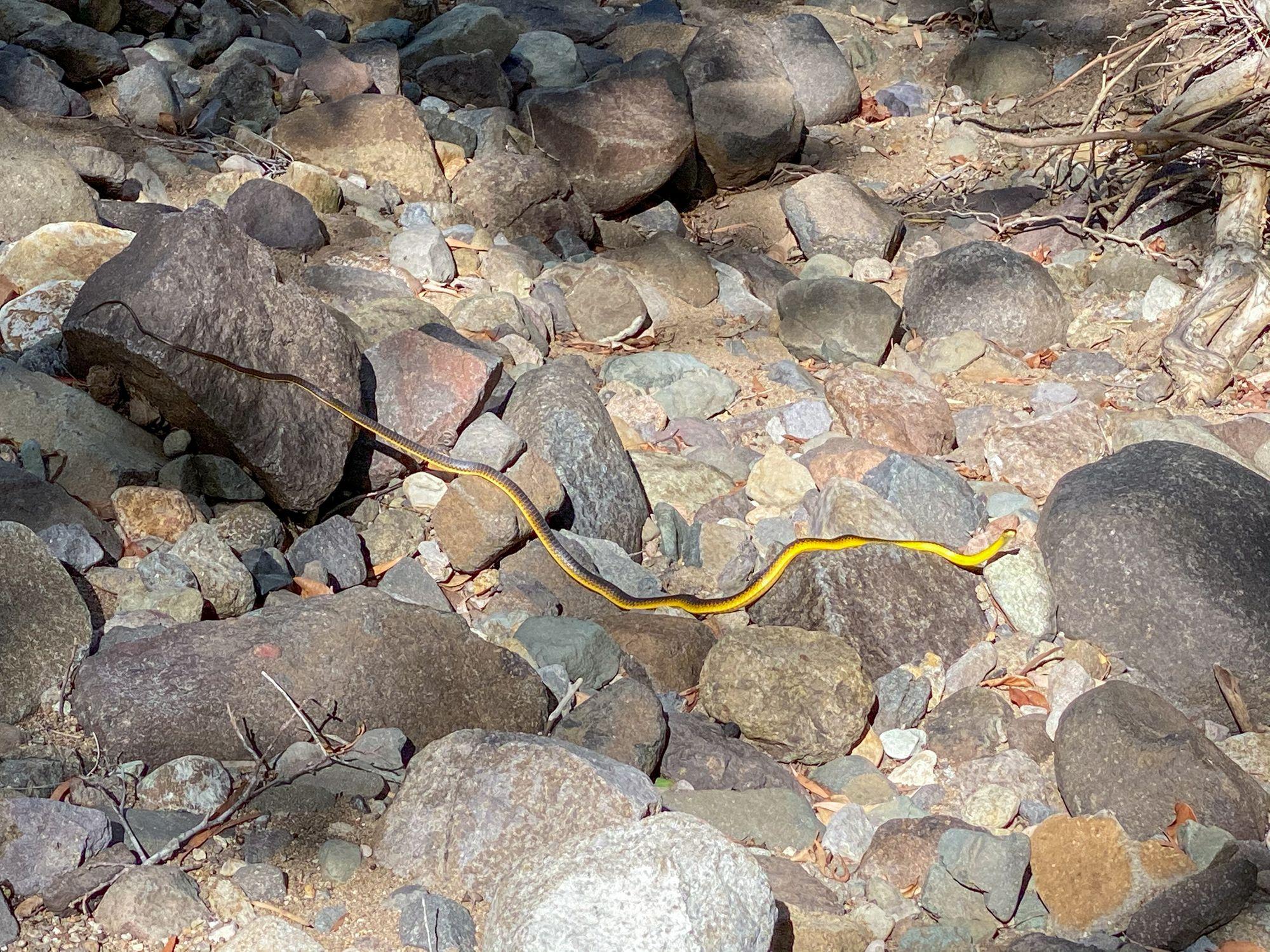 snake in creek