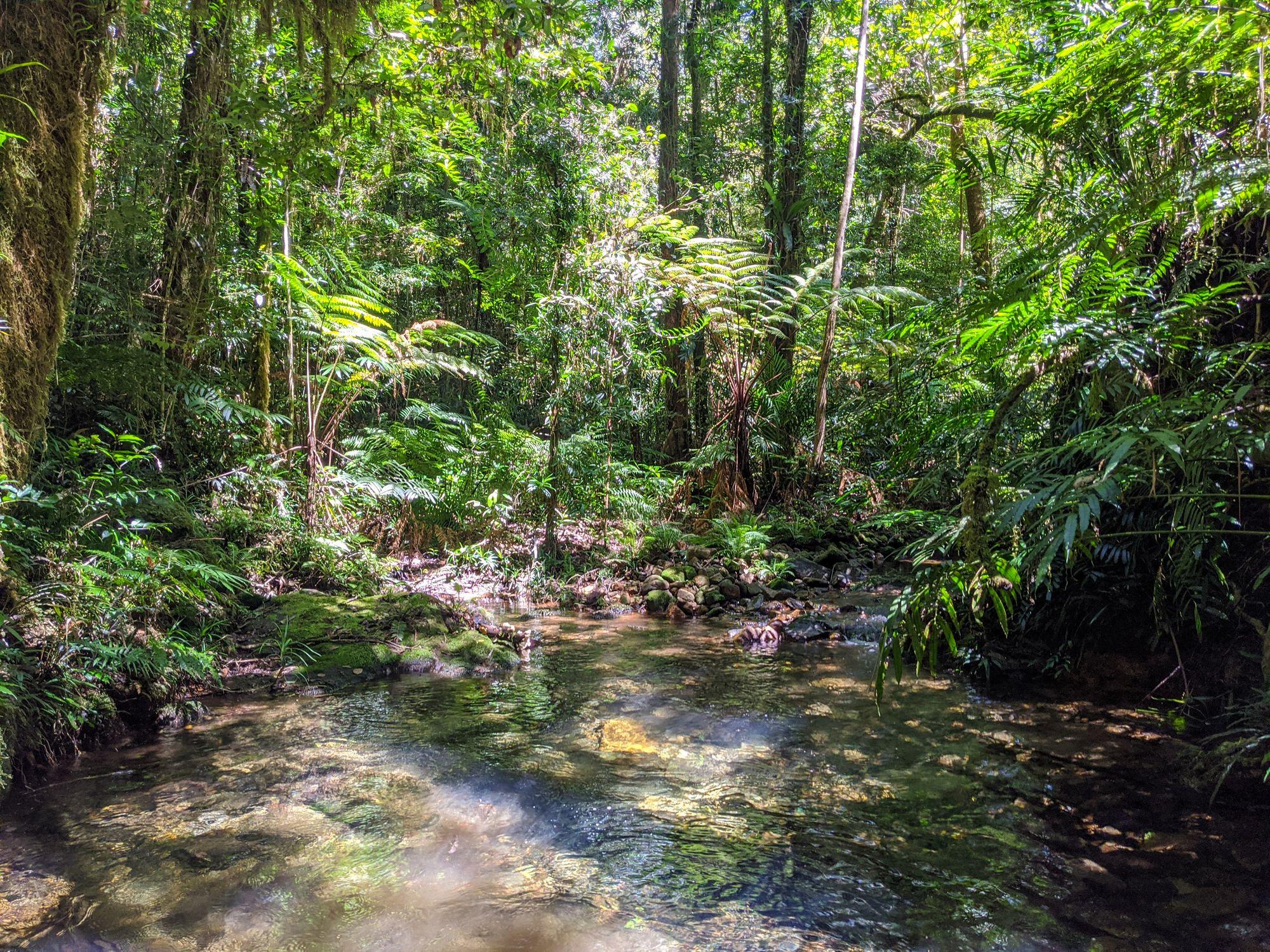 upper bullocky toms creek stream