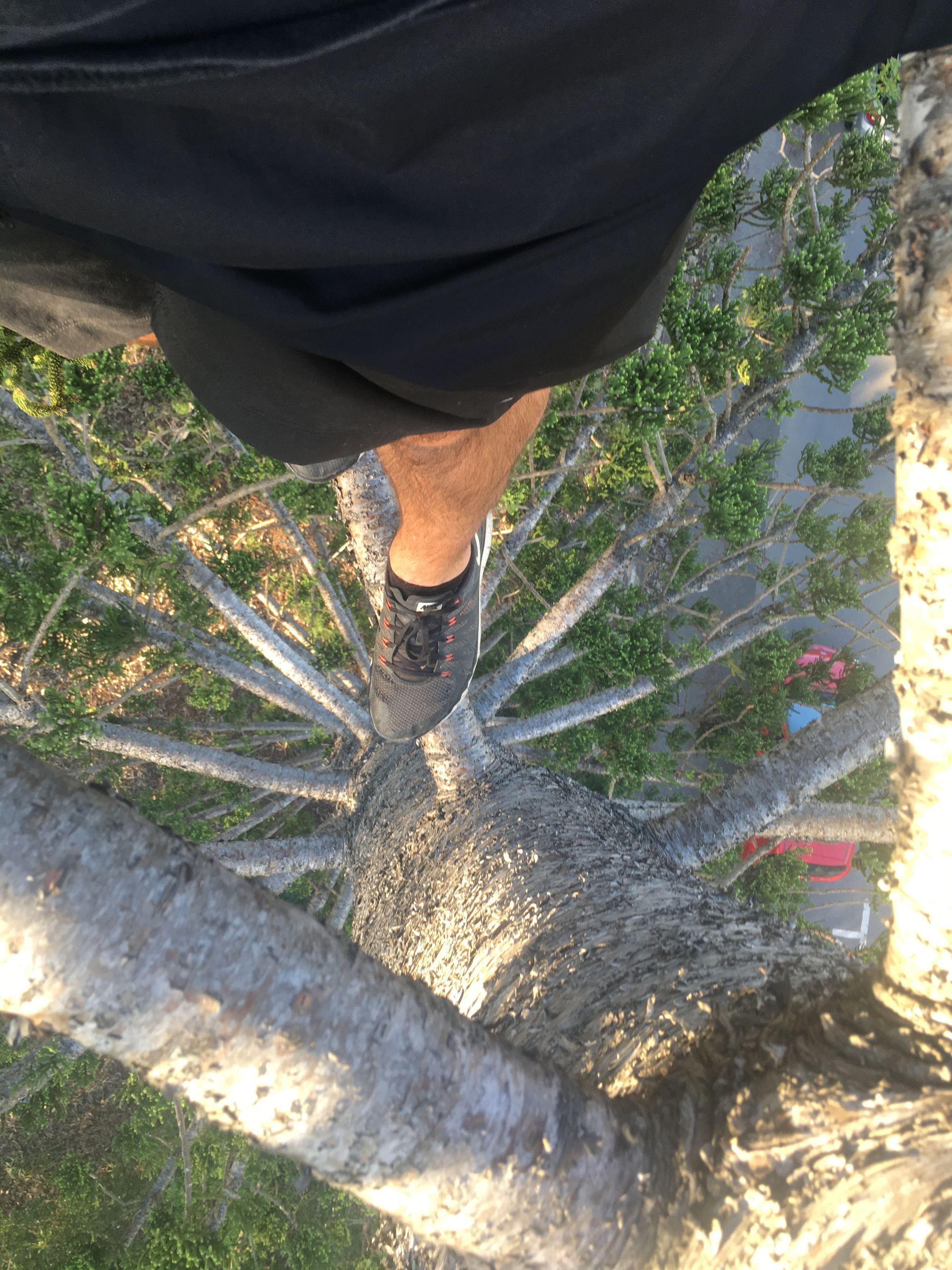 tree geocache