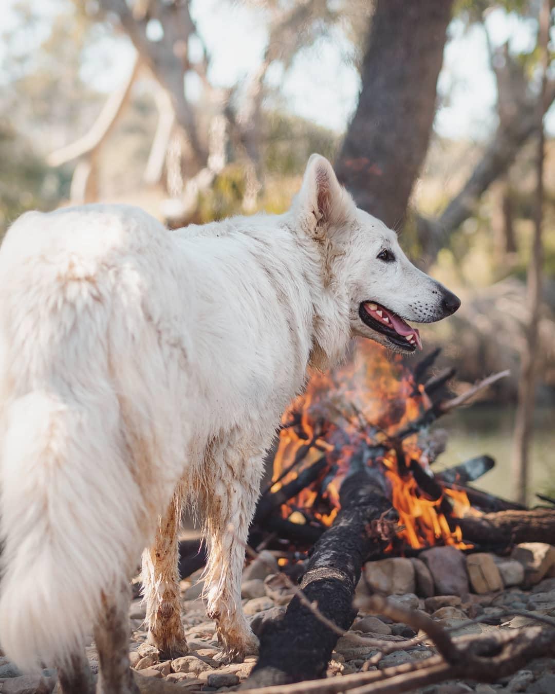 keelbottom creek dog hervey range