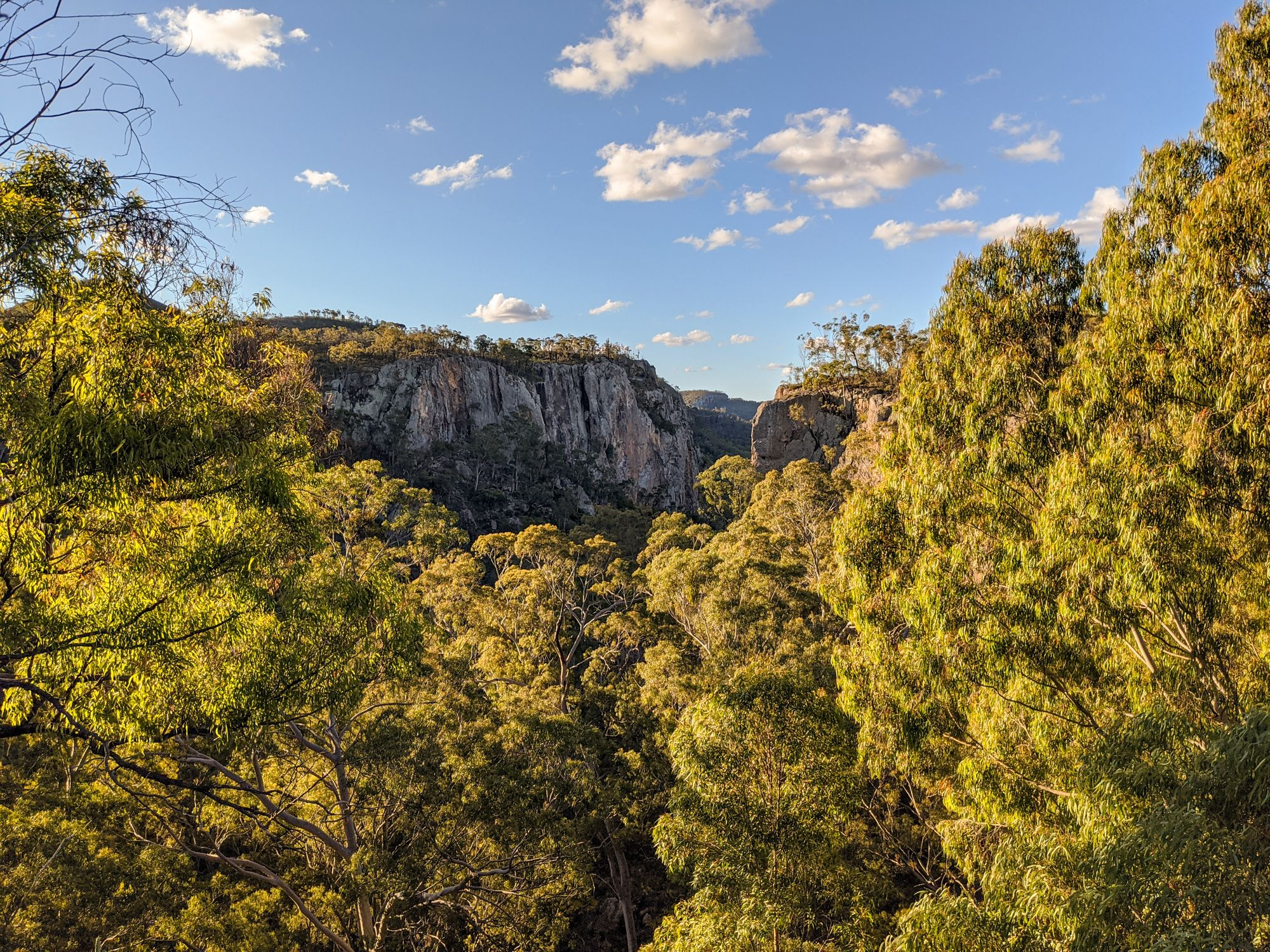 Freds Gorge trees Minerva Hills National Park.jpg