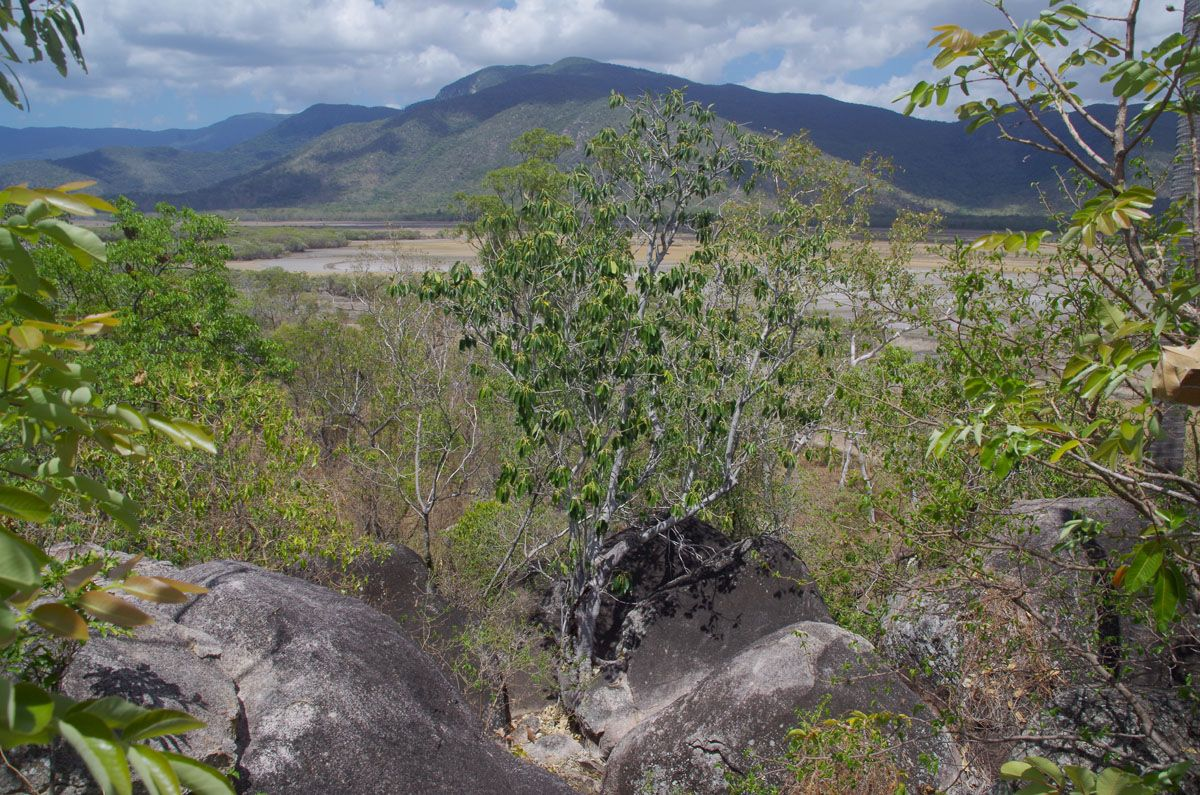 Mount Burrumbush lookout