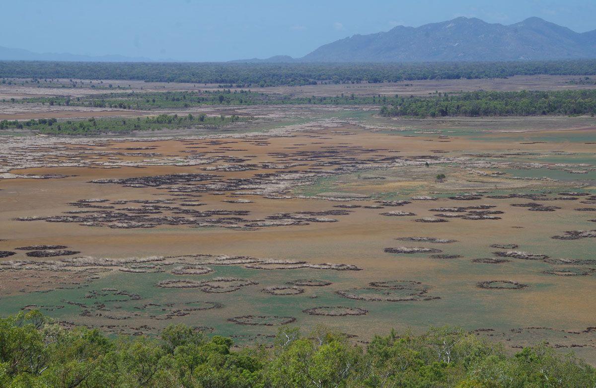 Mount Burrumbush marsh views