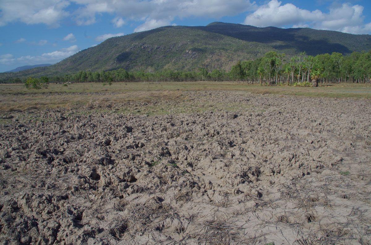 Mount Burrumbush marsh
