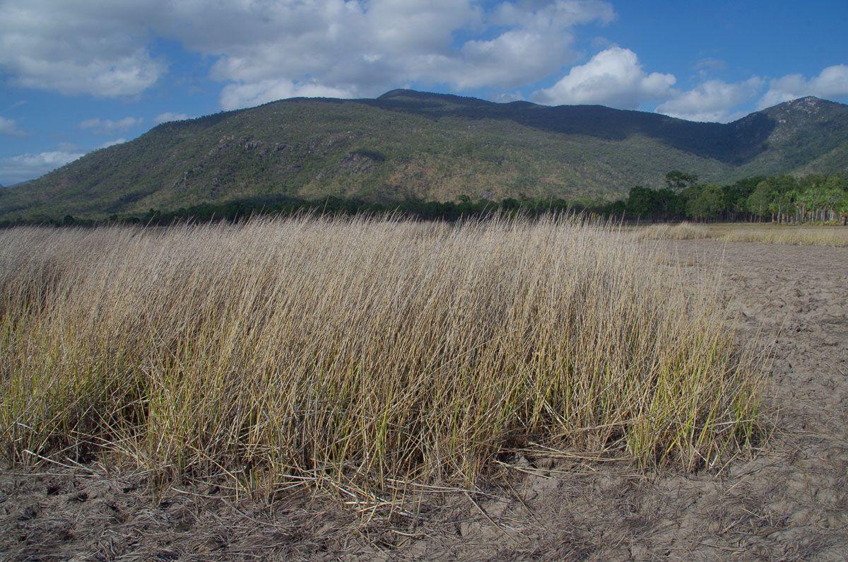 Mount Burrumbush marshy grass