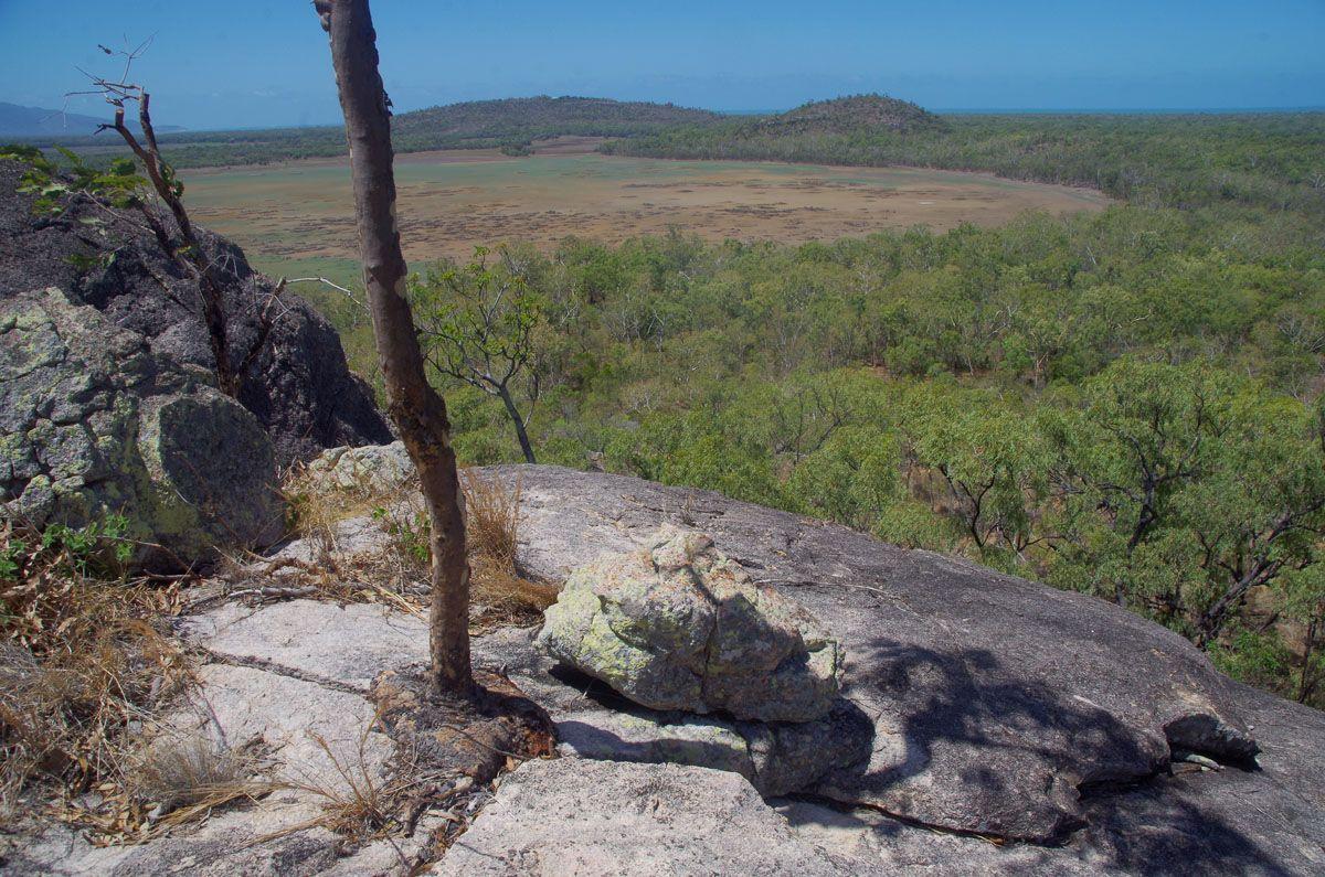 Mount Burrumbush tree