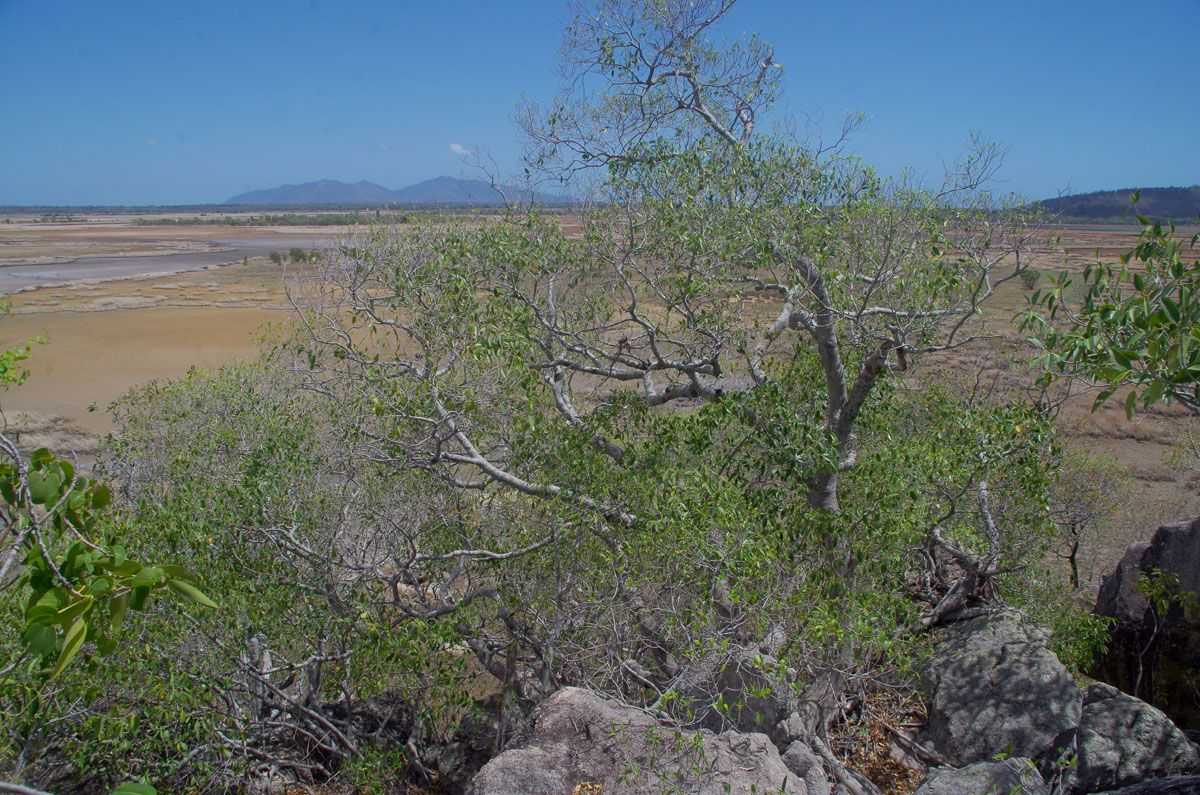 Mount Burrumbush views