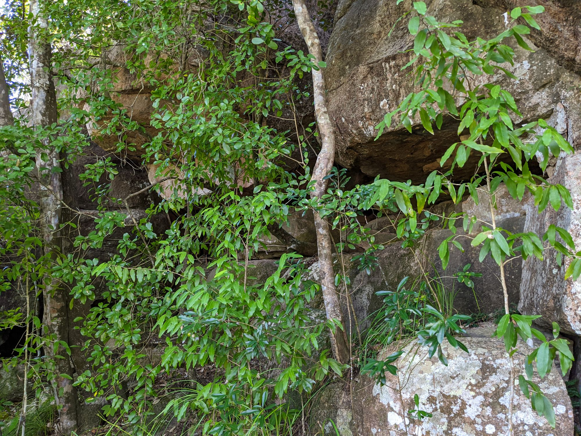 Mt Burrumbush Feltham Cone cave enterence