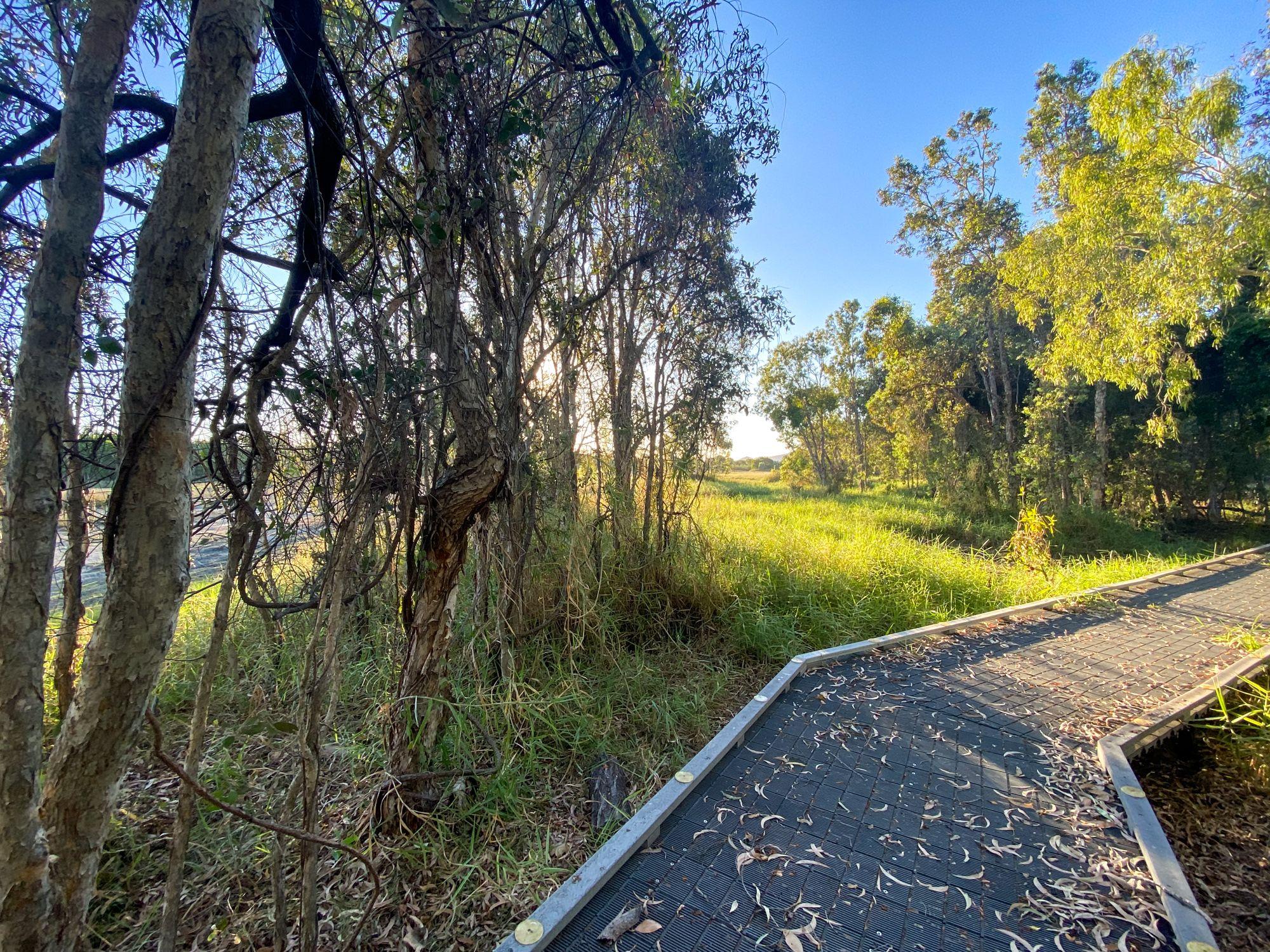 rowes bay wetlands boardwalk path