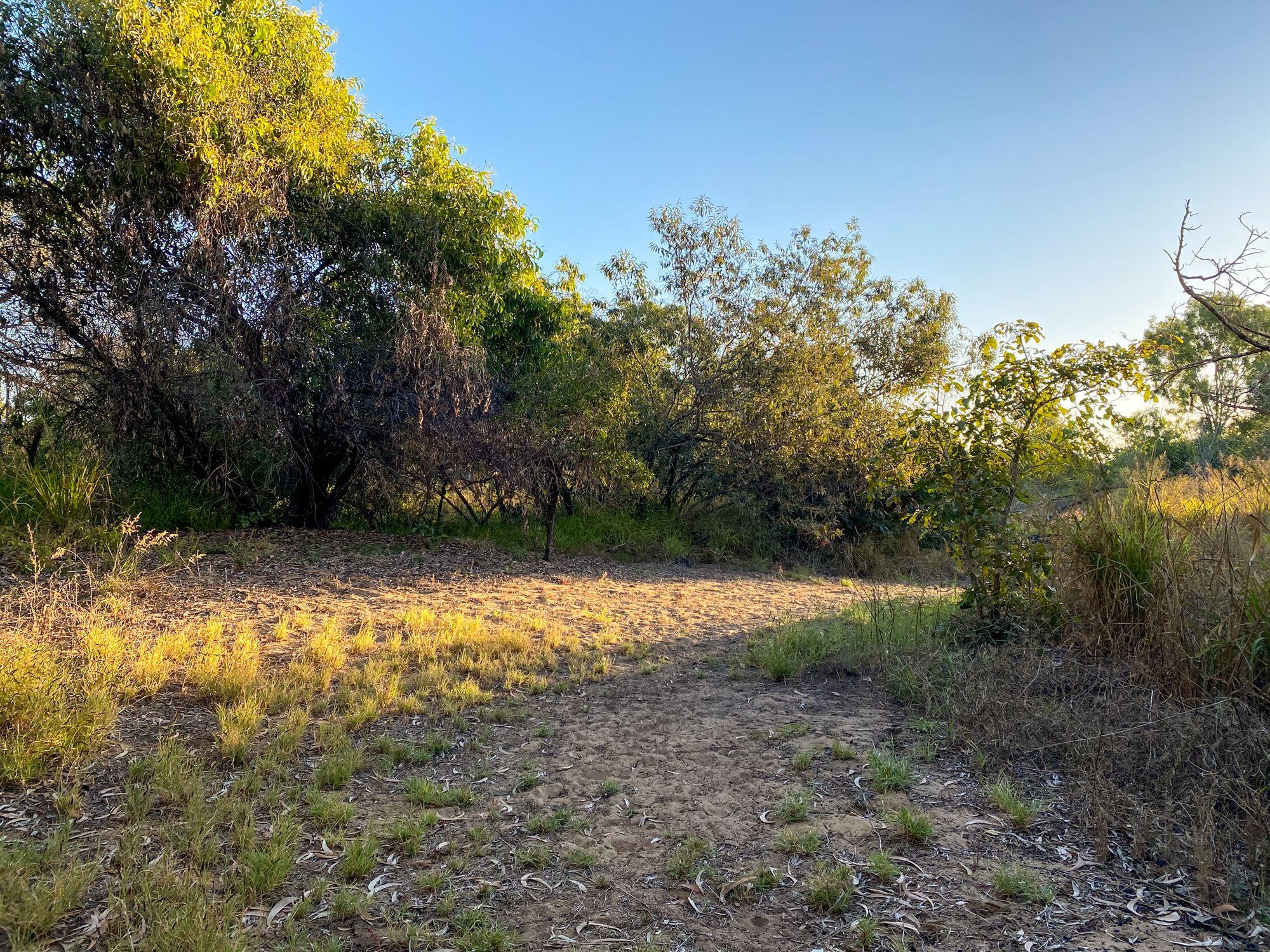 rowes bay wetlands turkey mound beach jasmin