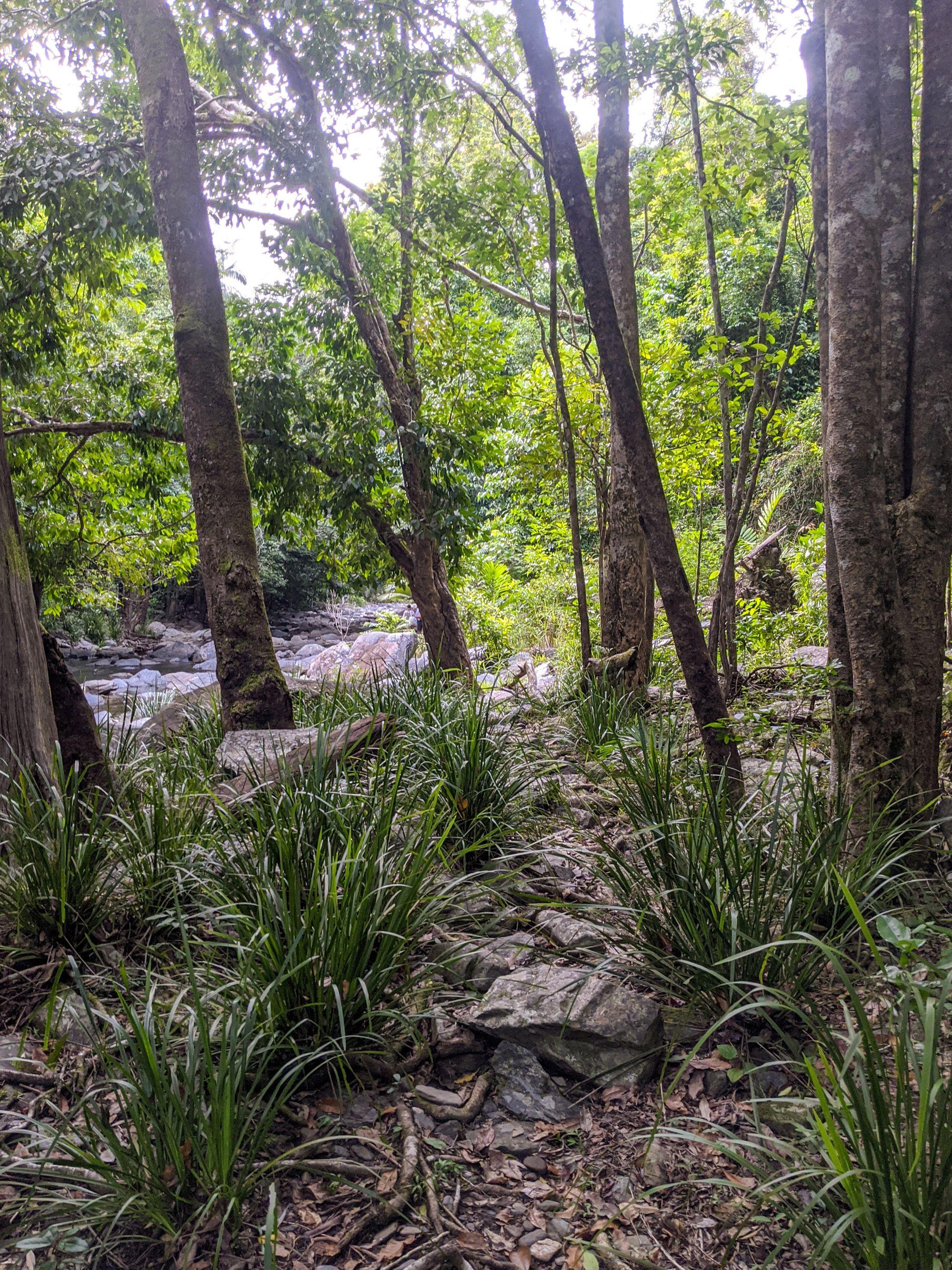 spring creek falls hike