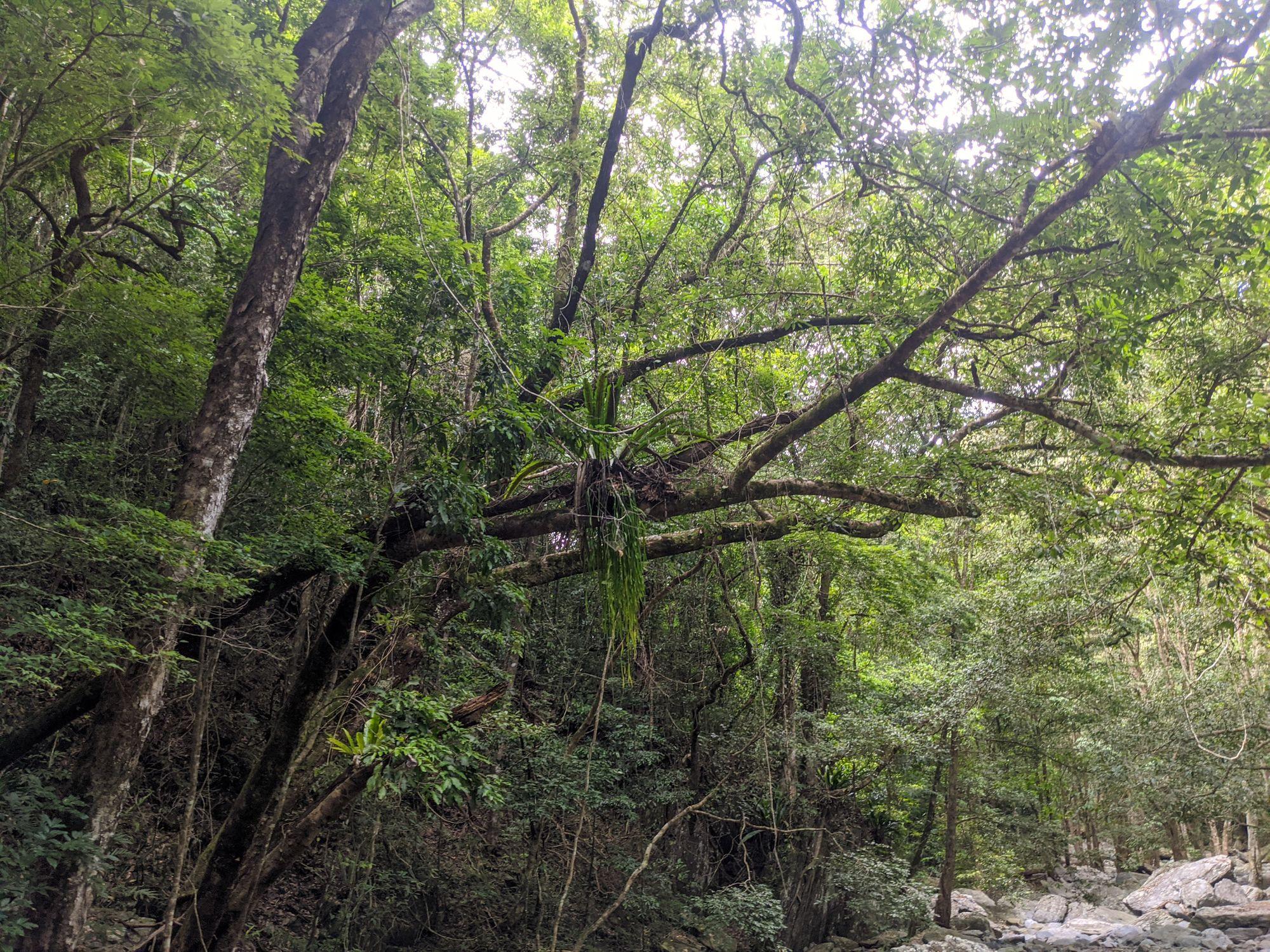 spring creek ferns mowbray