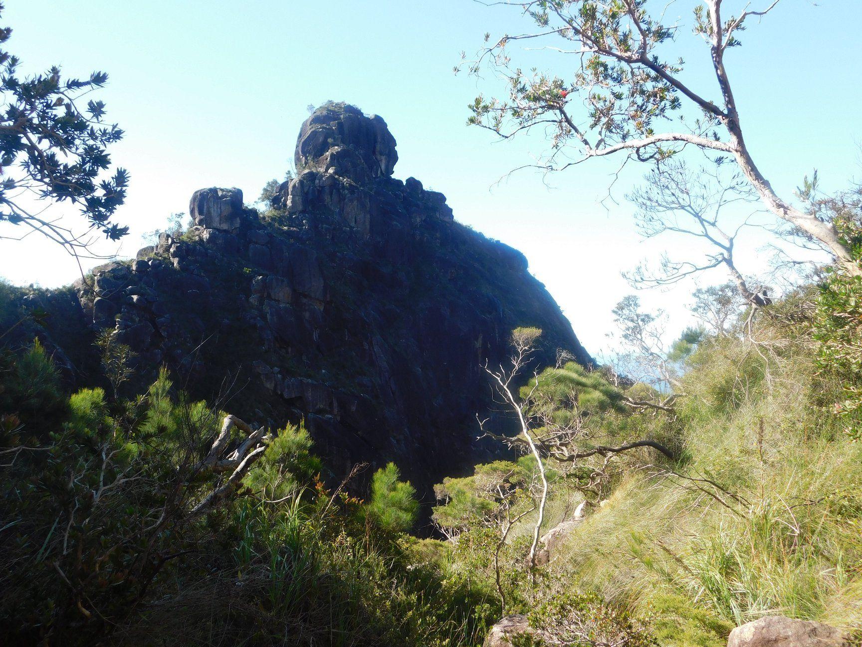 the wart hinchinbrook island national park