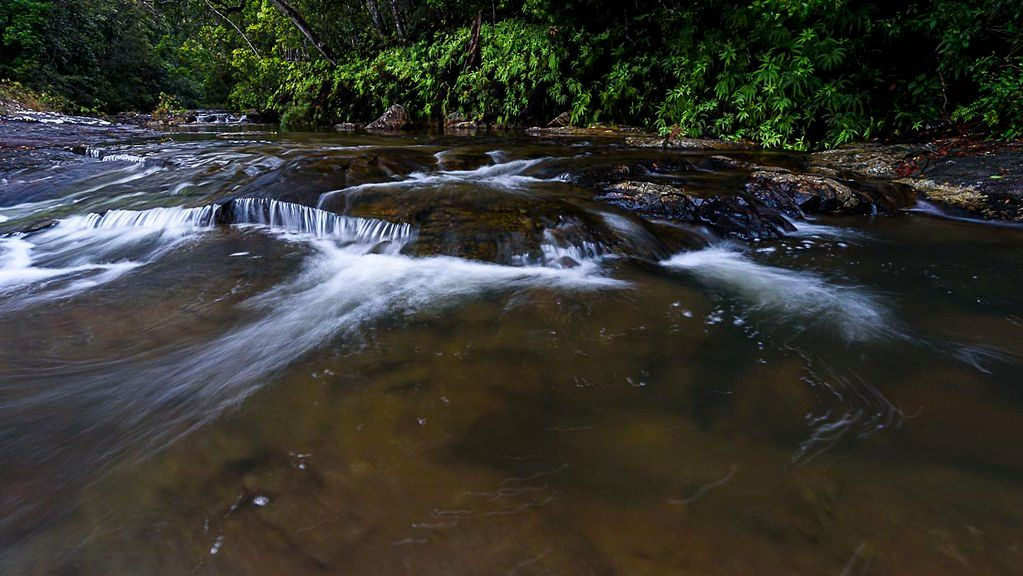Birthday Creek paluma 1