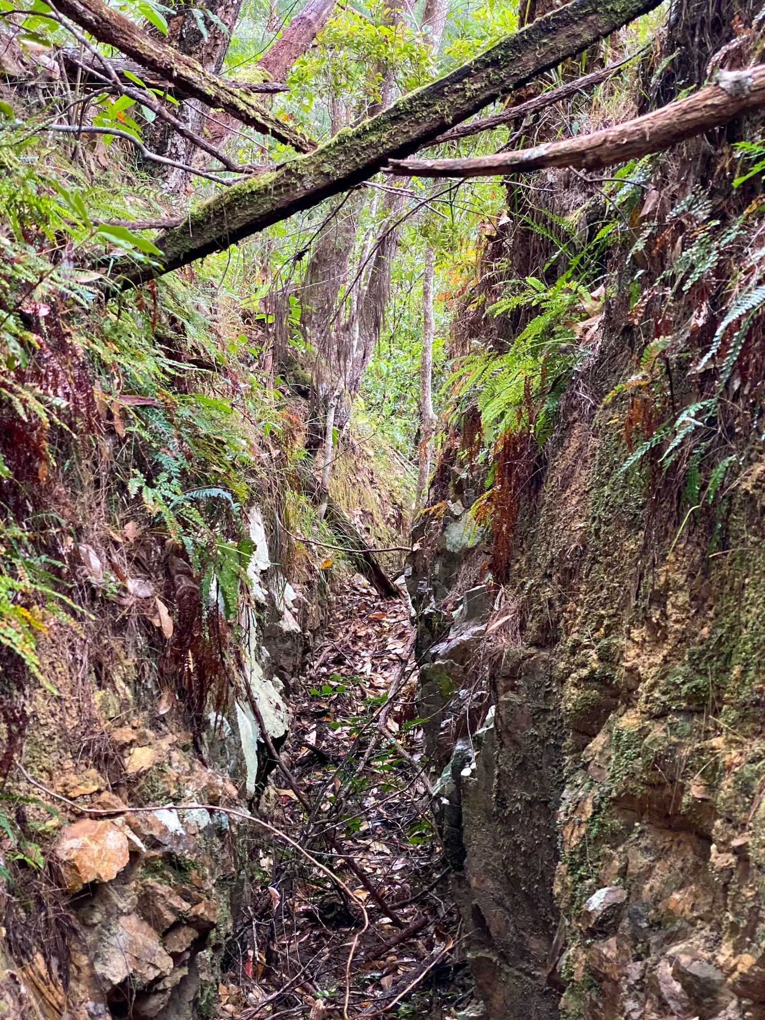 bluegum mine water race