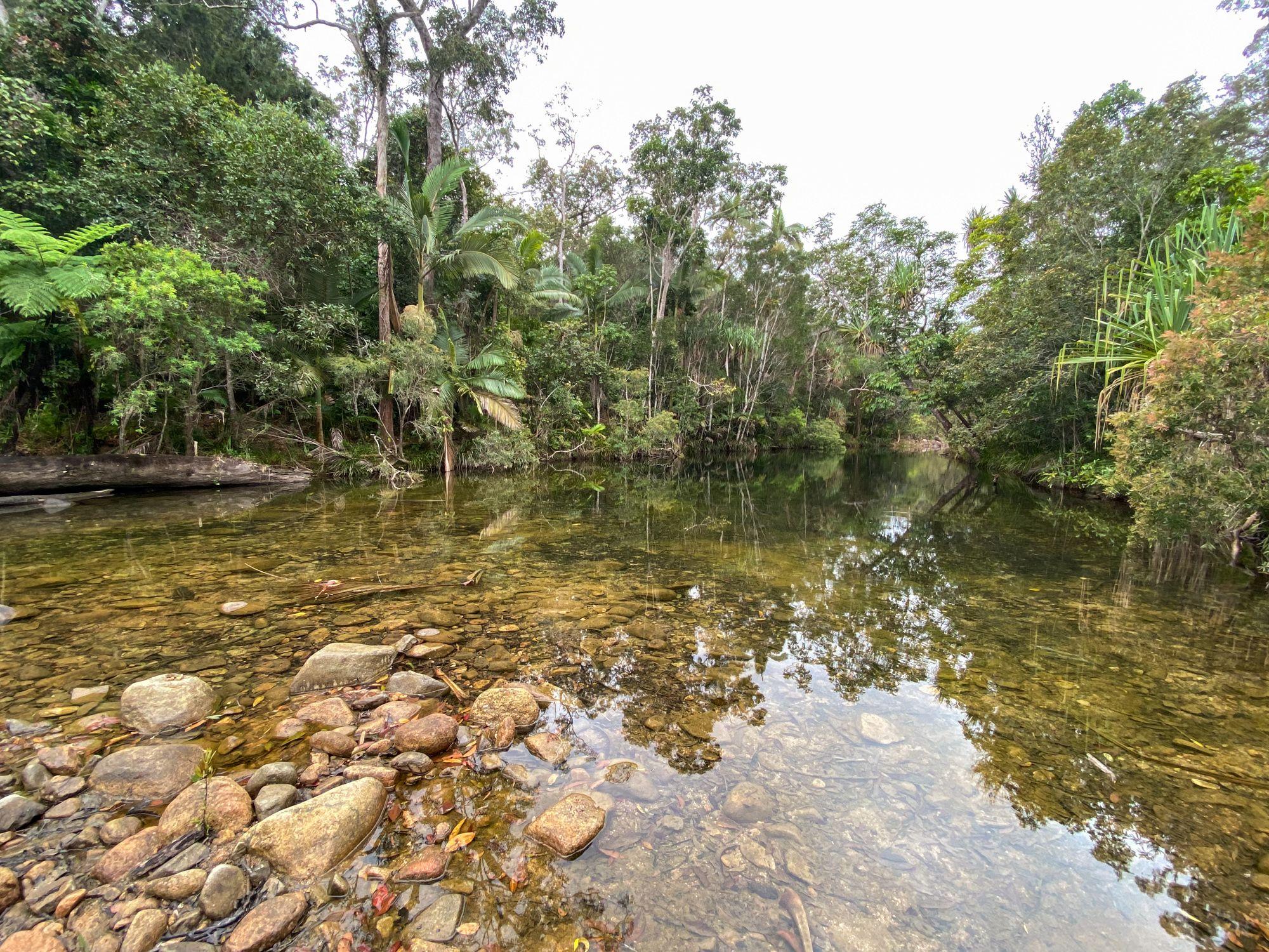 gluegum creek