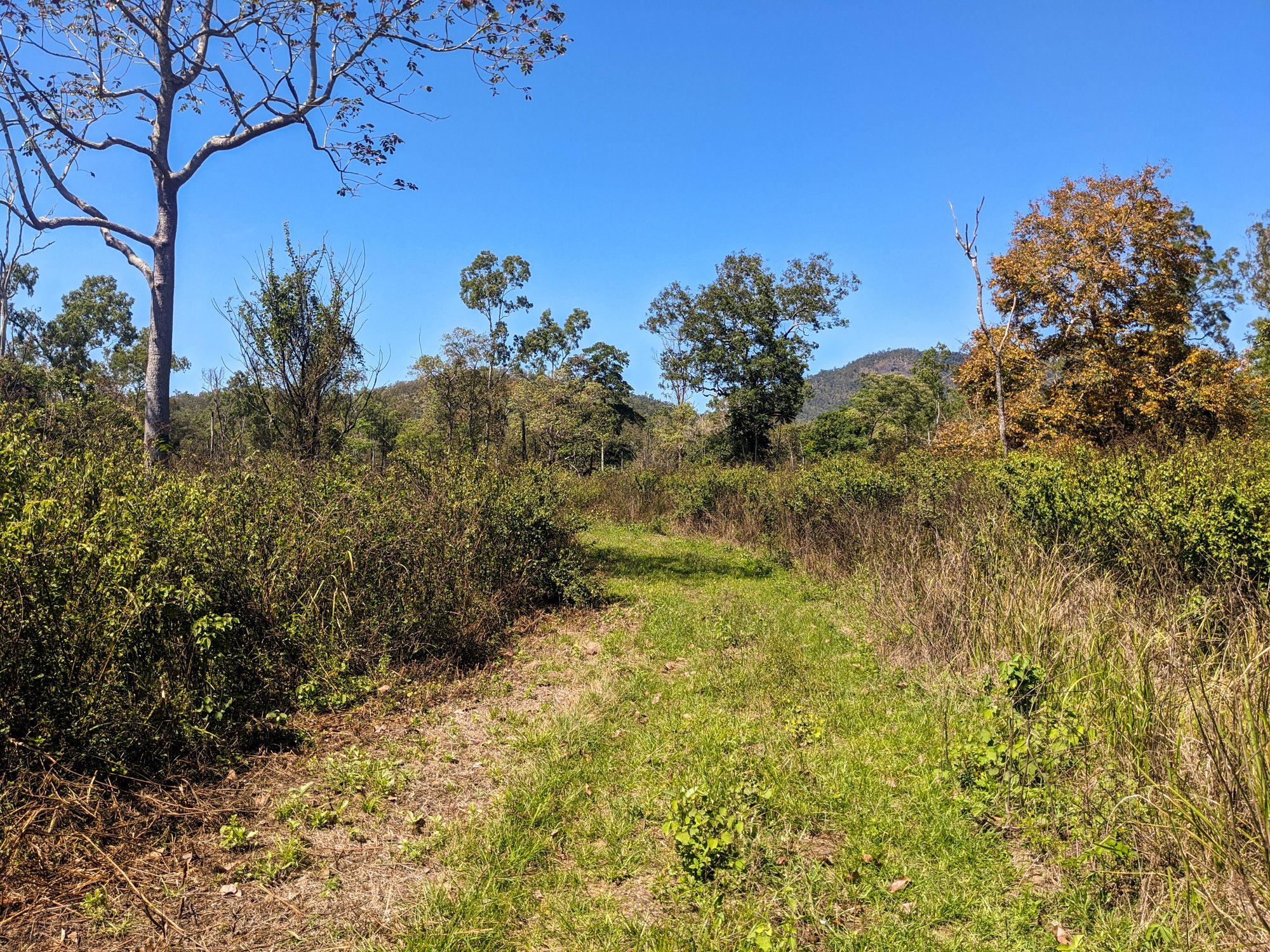 Henrietta trail weeds 2