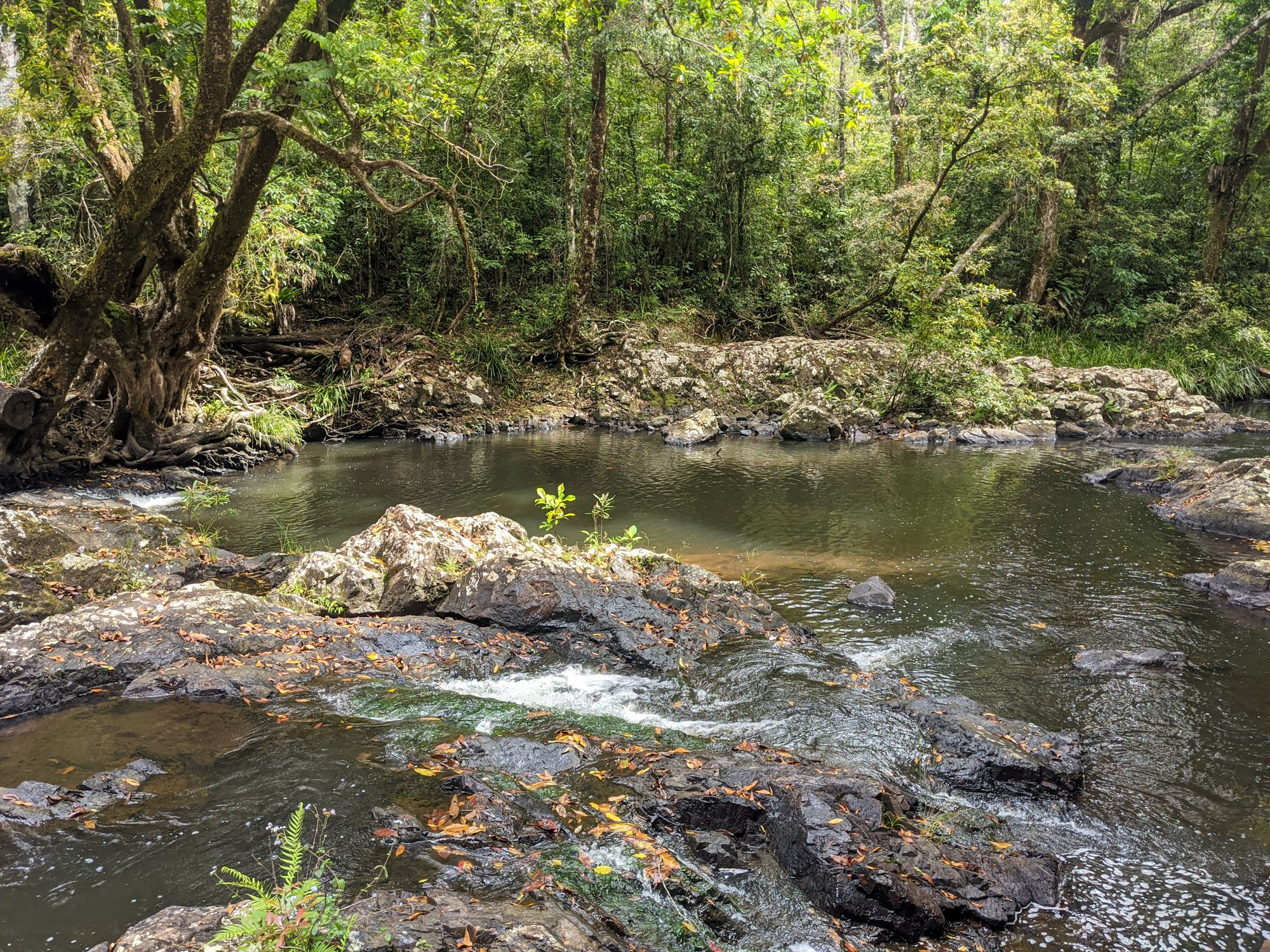 flagstone creek stream