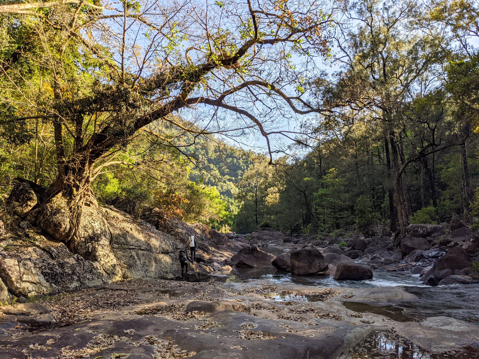 garawalt creek tree