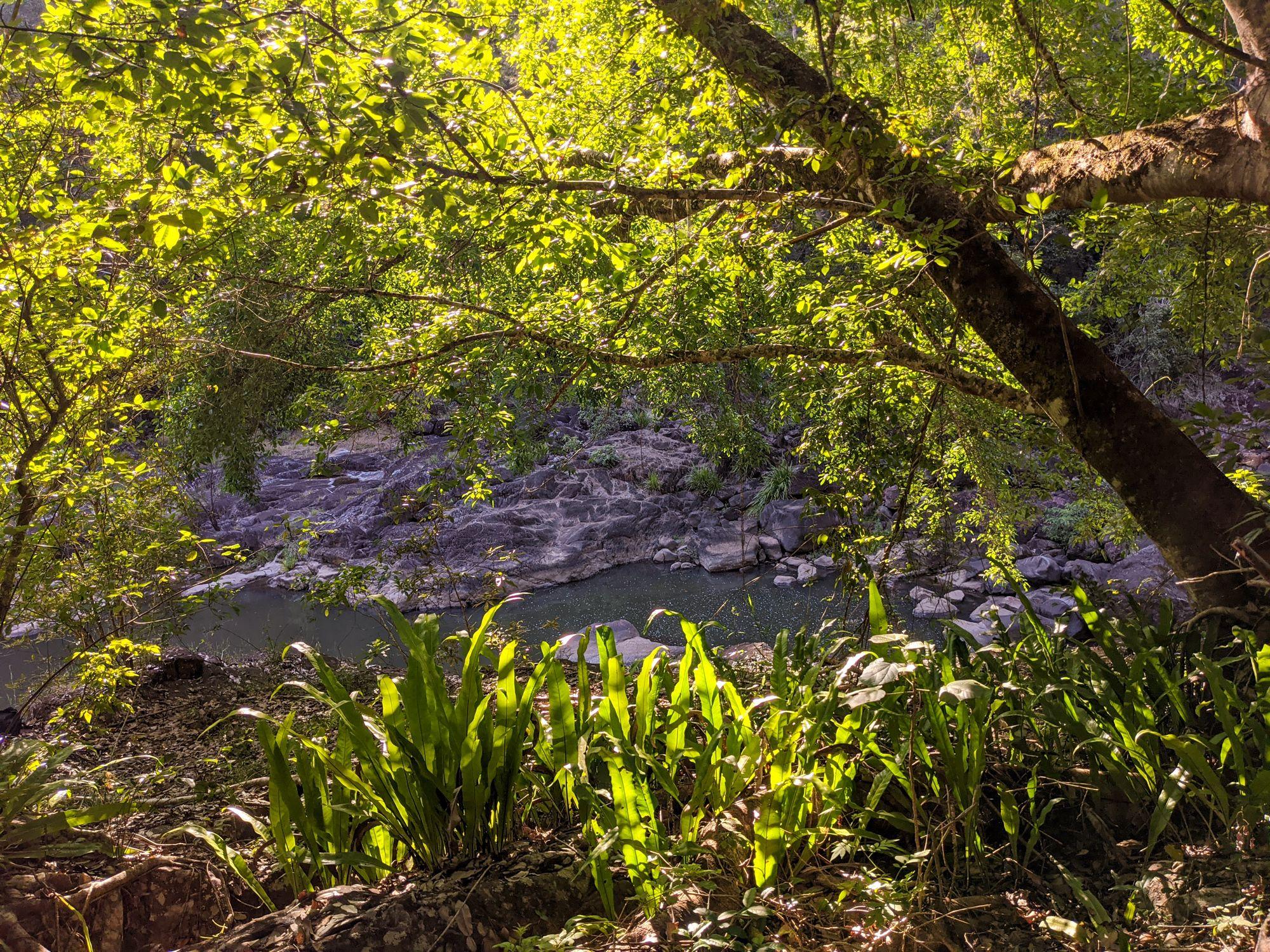 garrawalt creek ferns