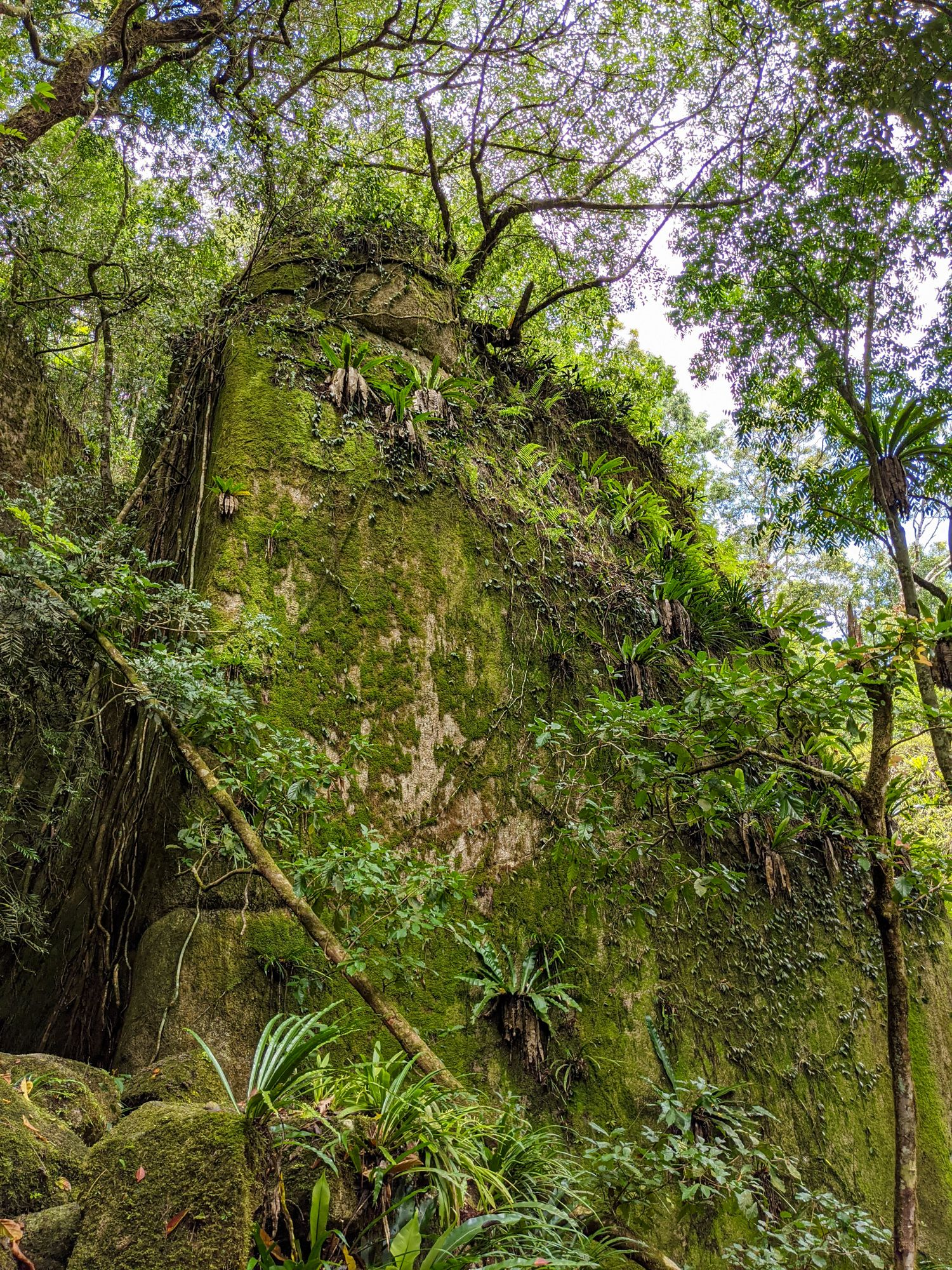 rock garden paluma range