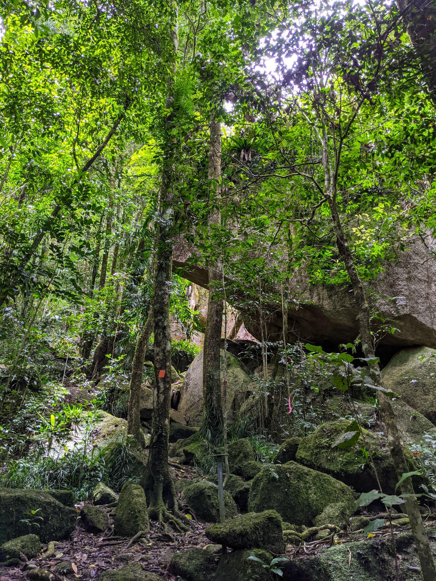 rock garden paluma