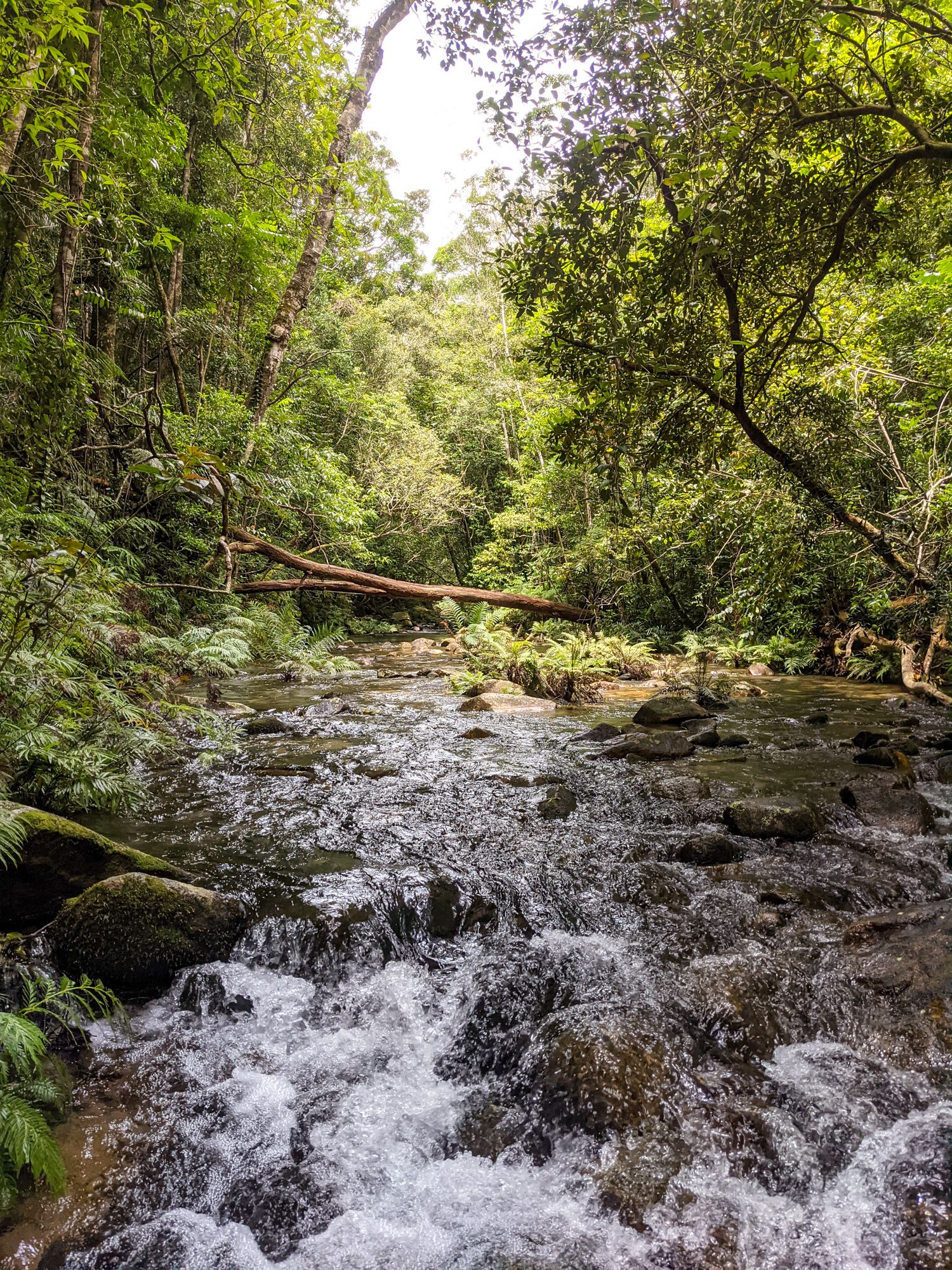crystal creek upper reaches