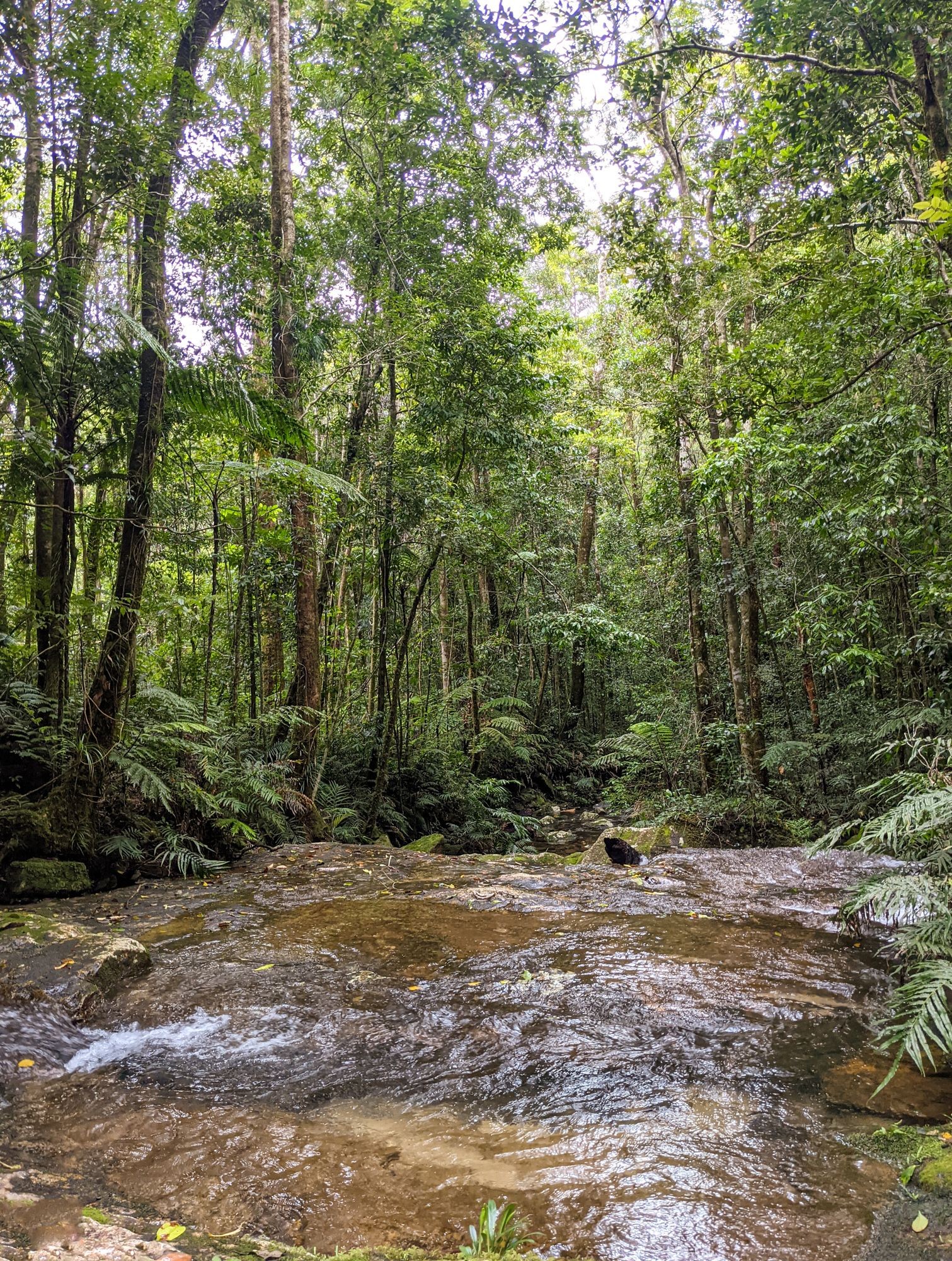 dobly creek scenery
