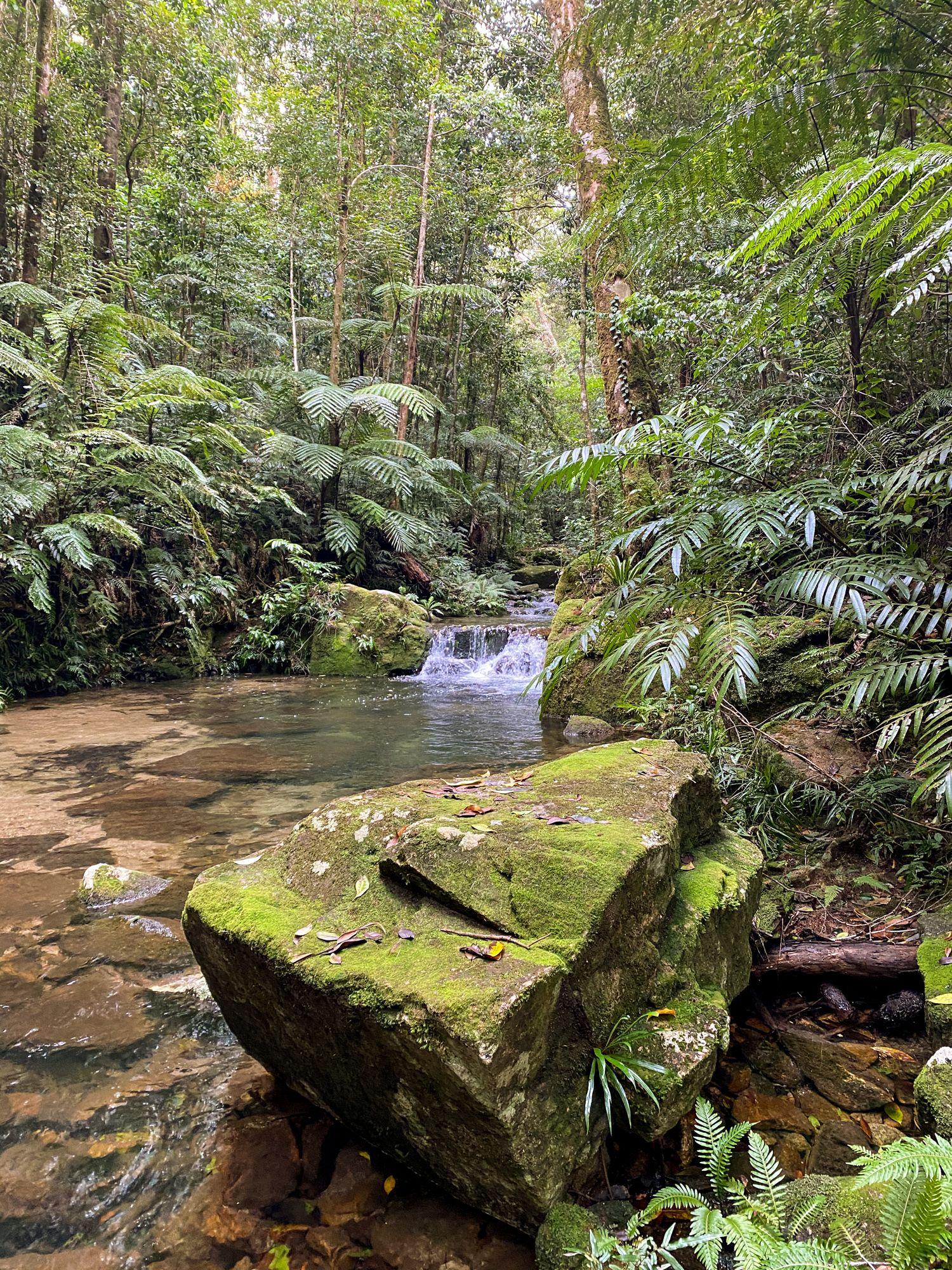 dolby creek mossy rock