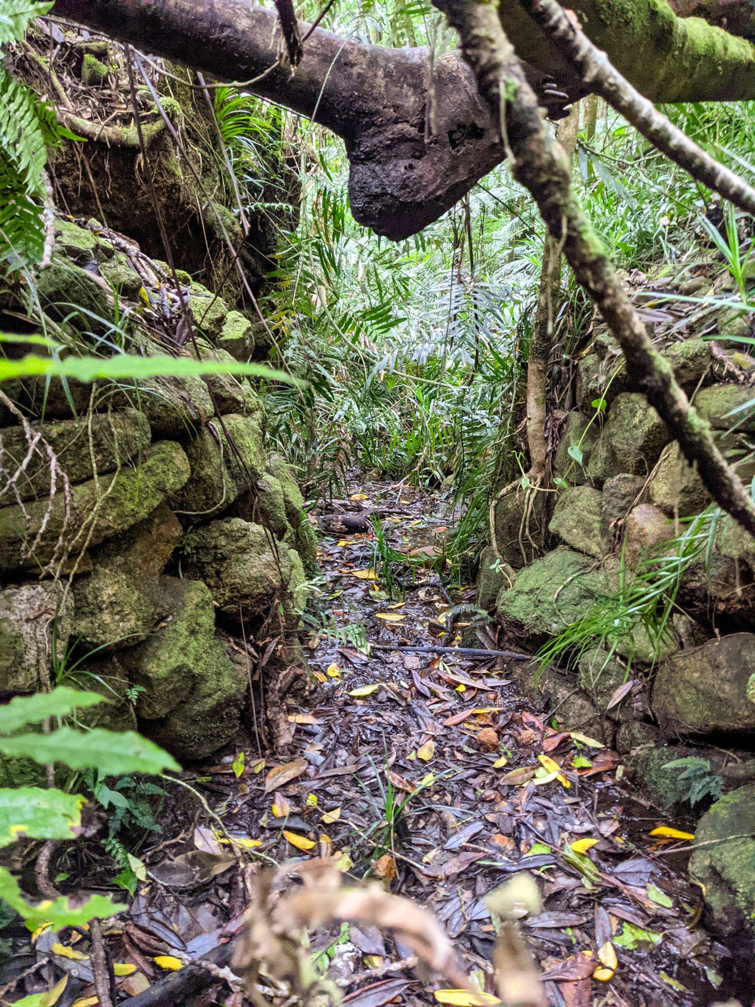 dolby creek rock walls