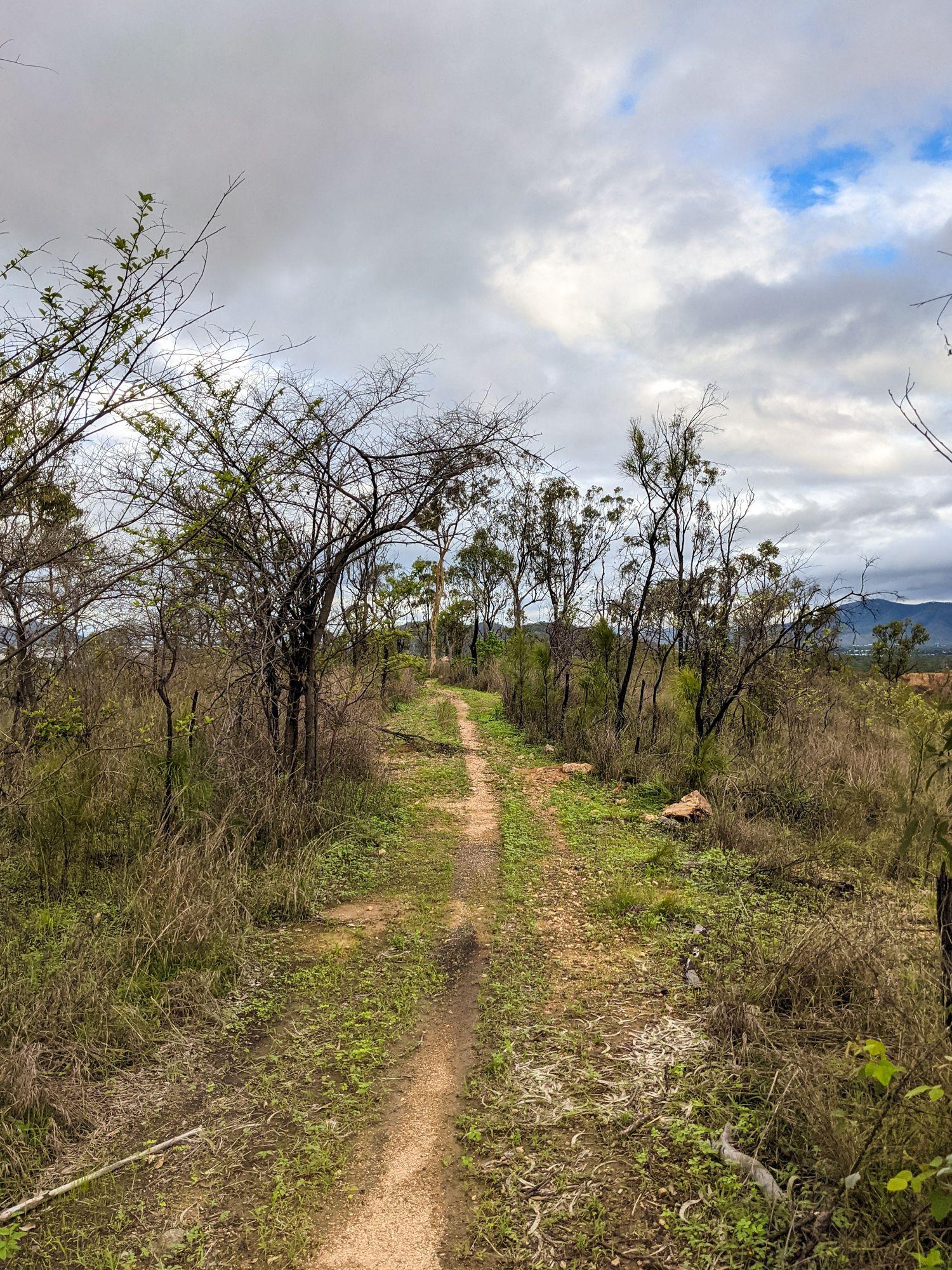 mt bohle trails