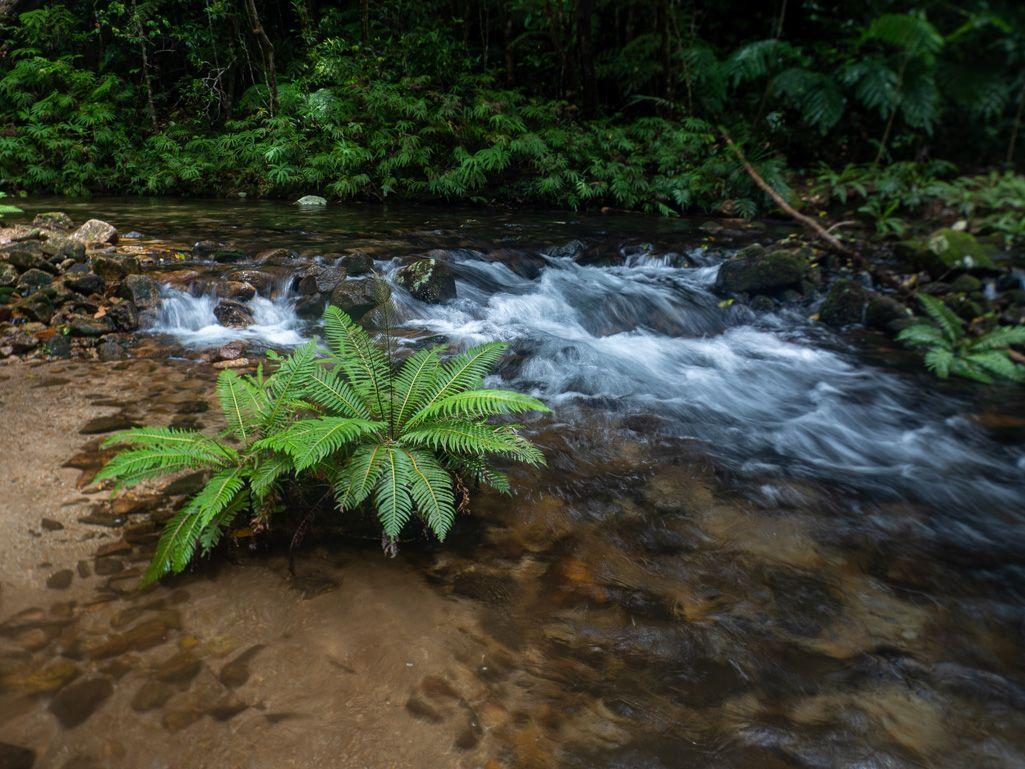upper Crystal Creek ferns