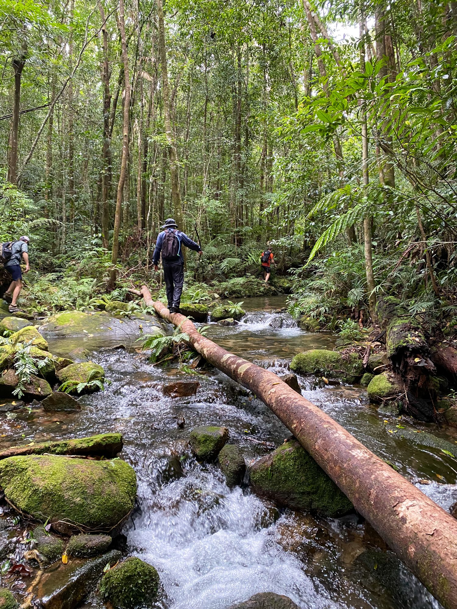 upper crystal creek log walk
