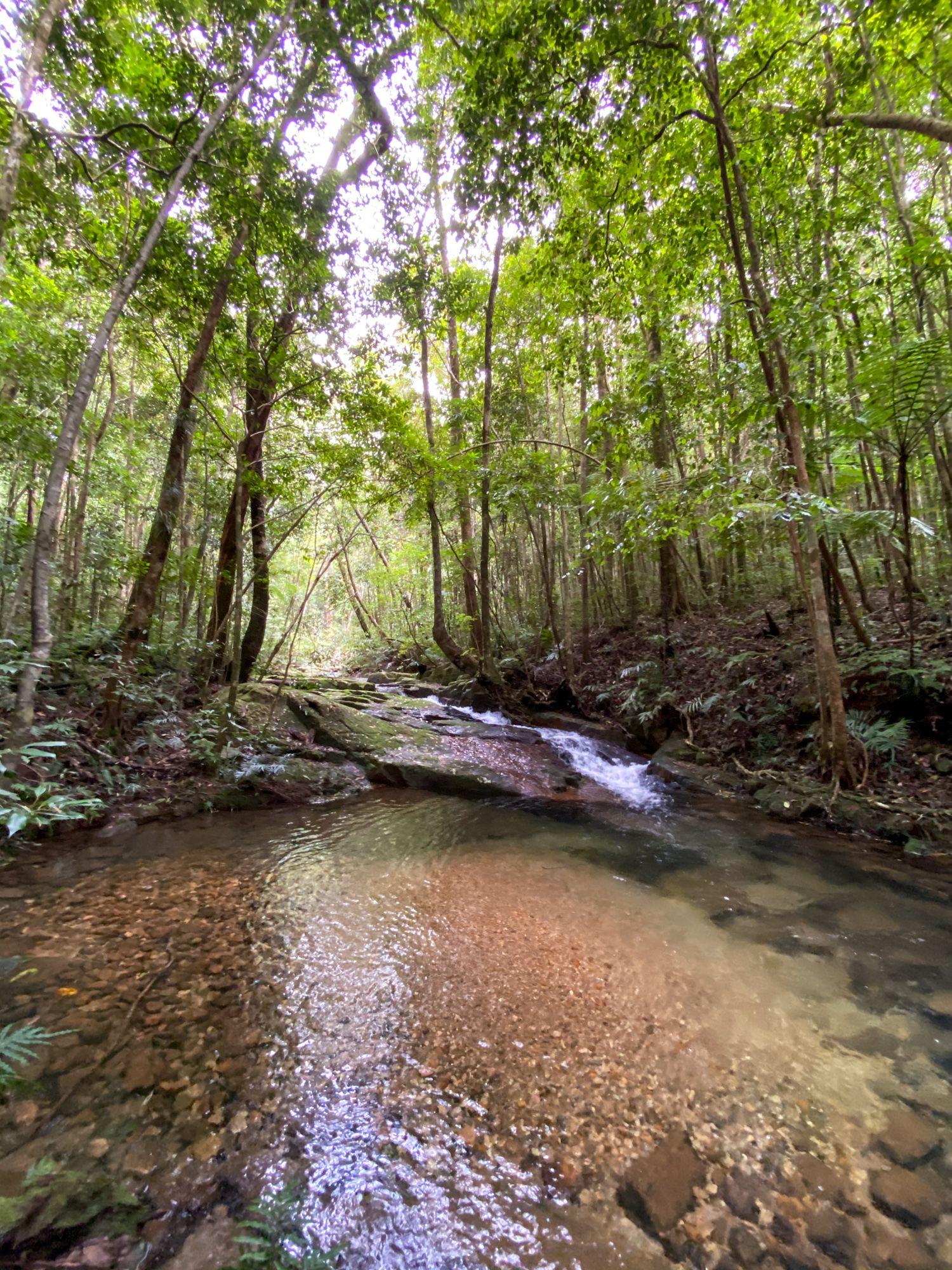 upper dolby creek