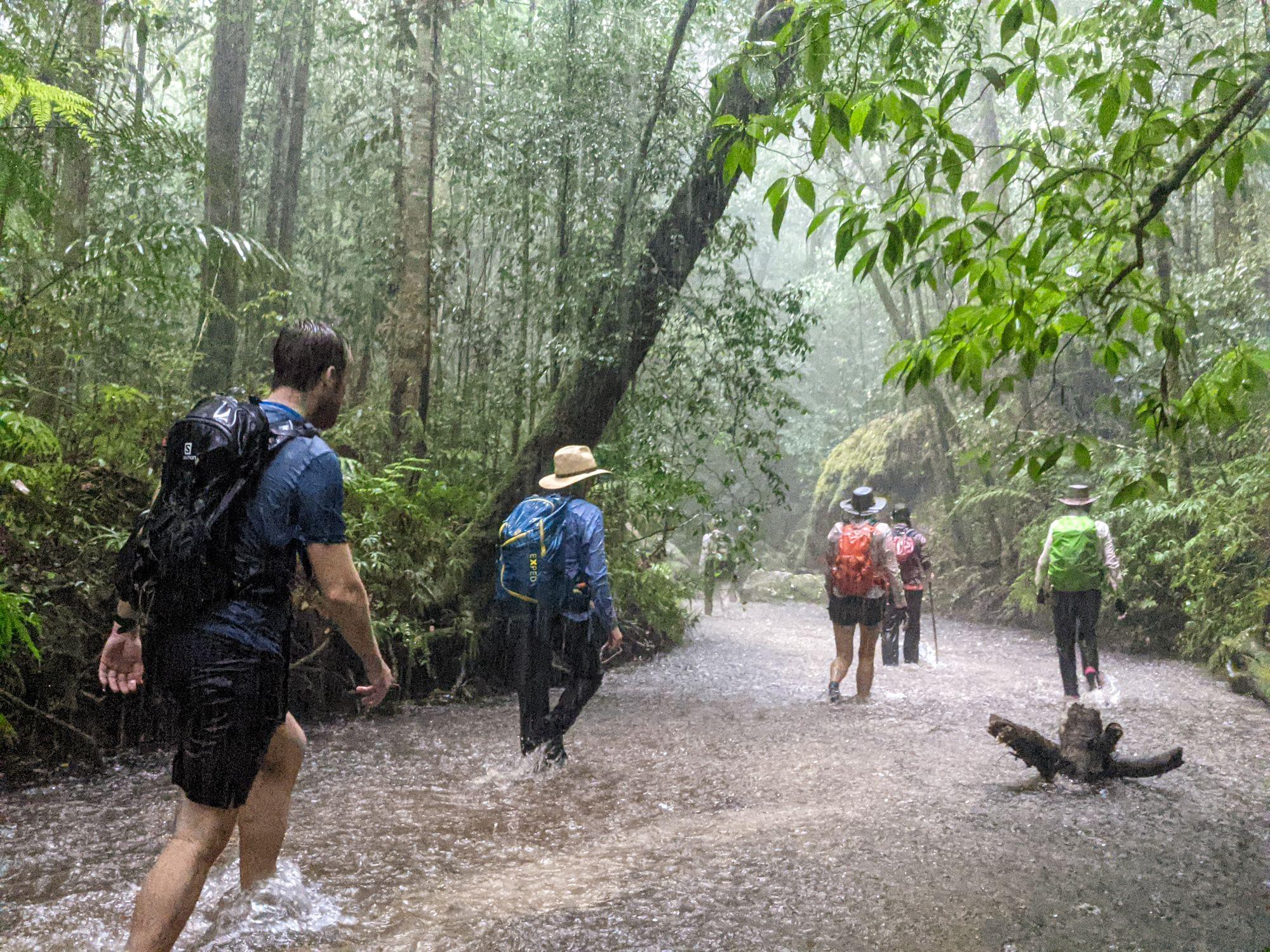 bushwalking in the rain