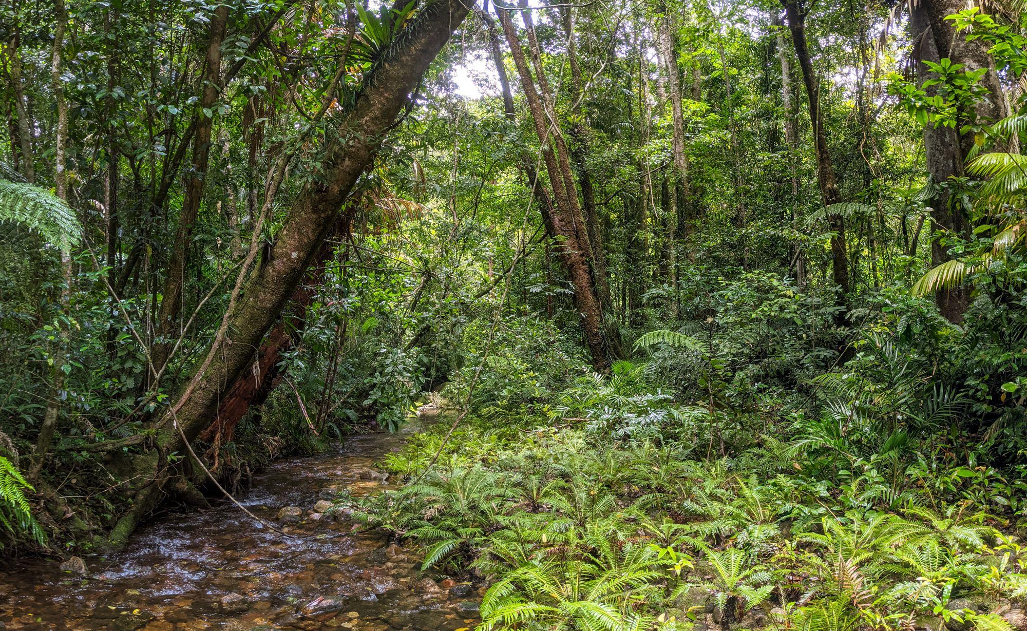 double barrel creek ferns