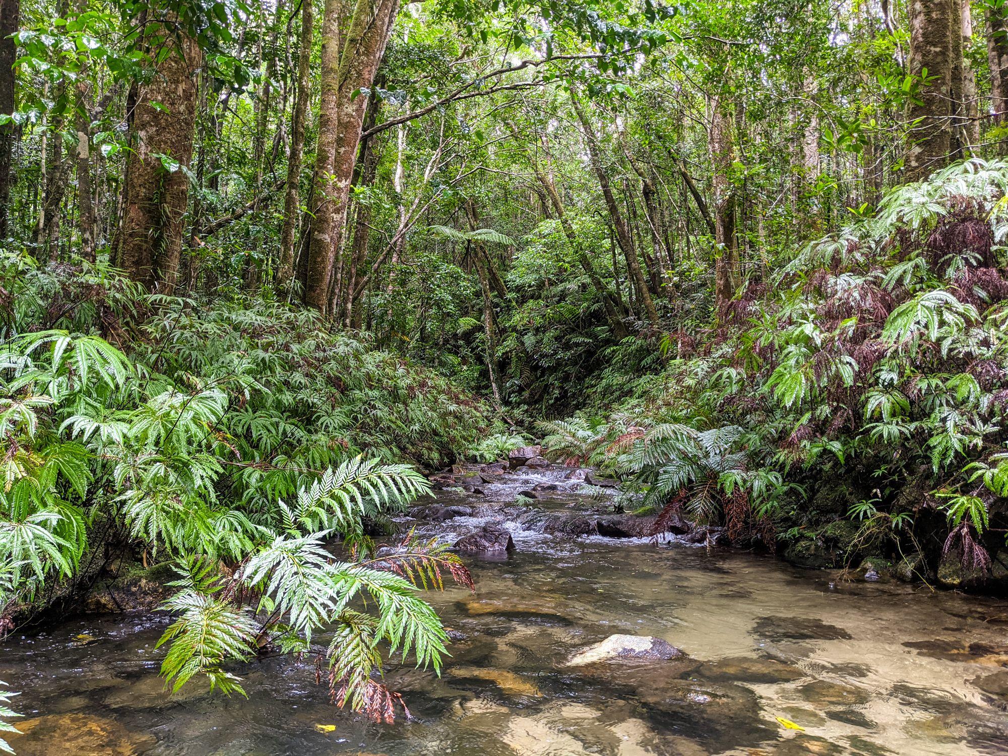 lower double barrel creek lush rainforest