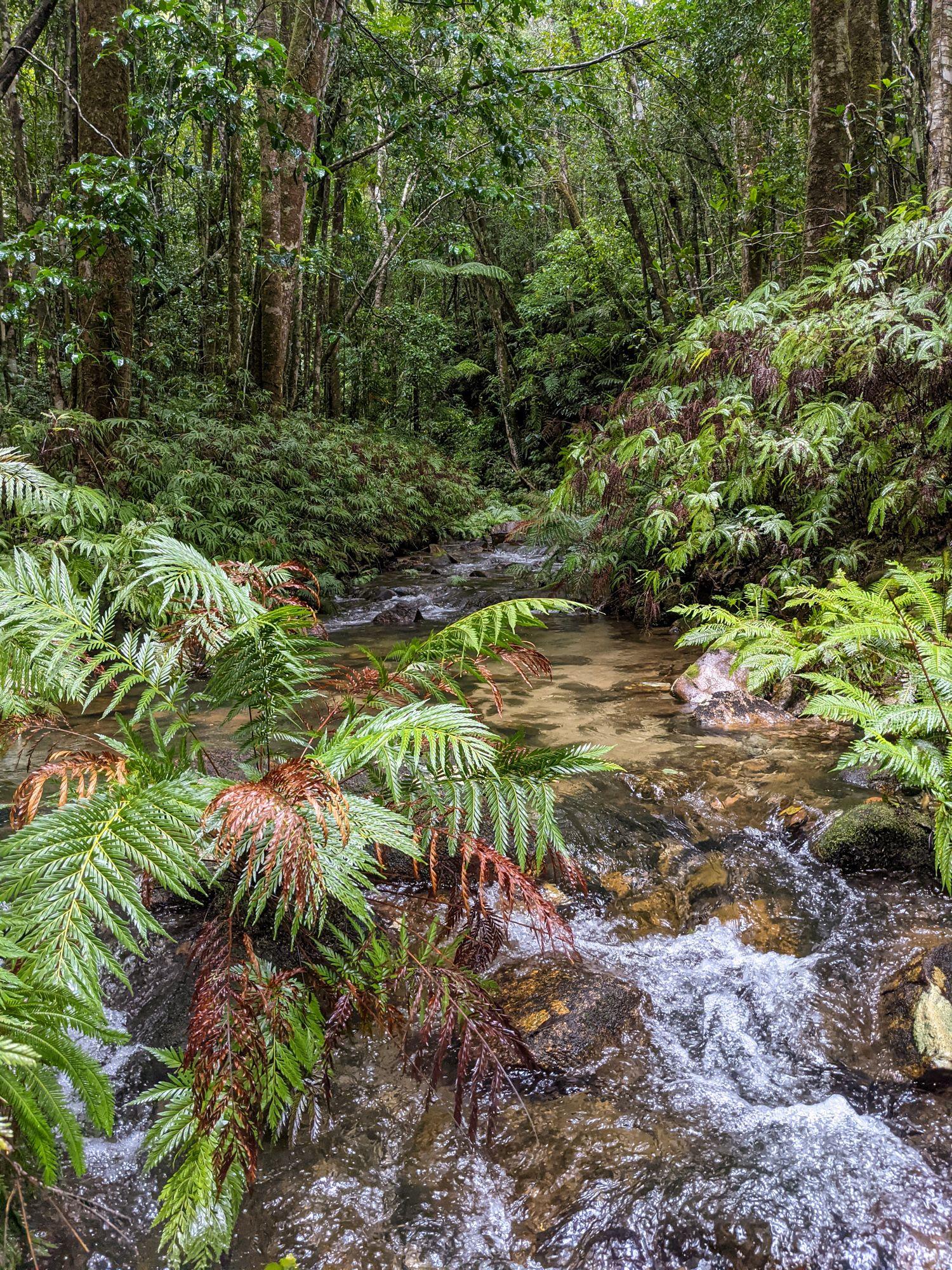 lower double barrel creek rainforest