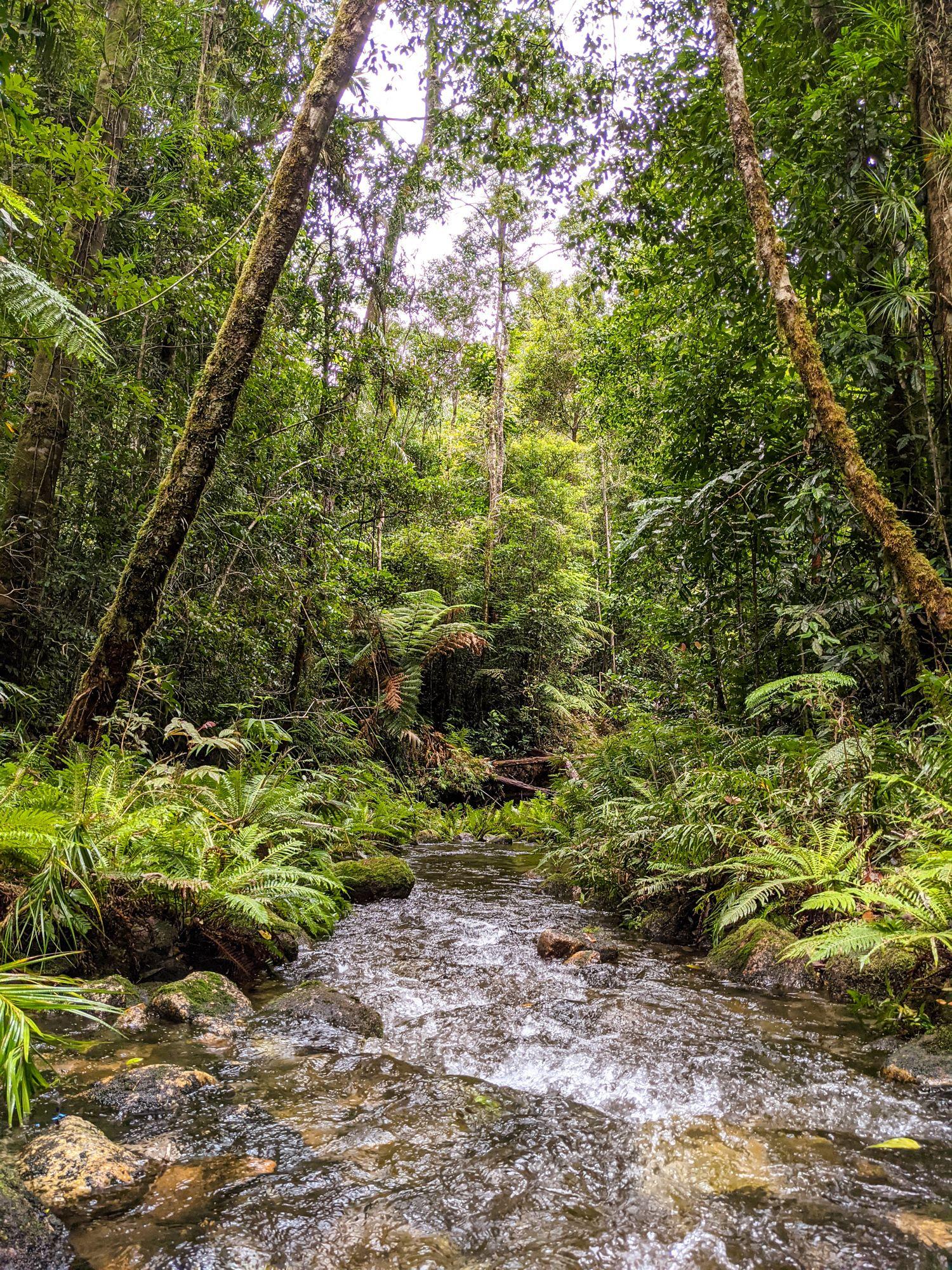 mid double barrel creek ferns
