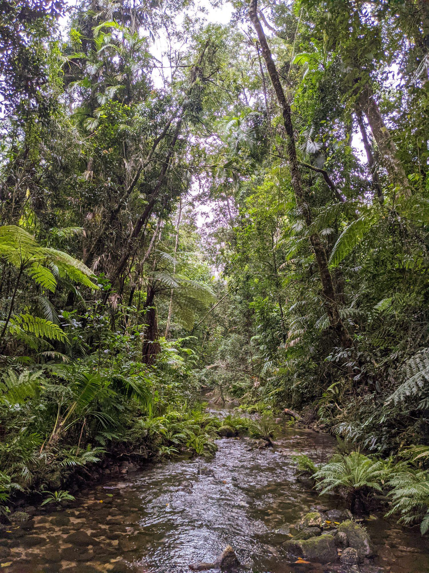 mid double barrel creek rainforest