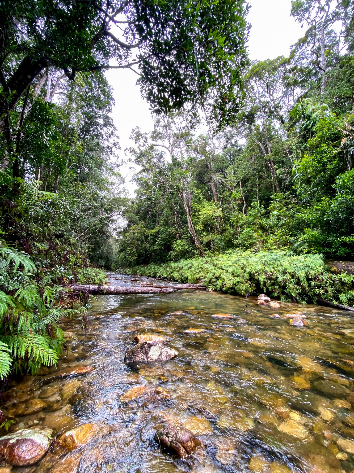 upper crystal creek stream