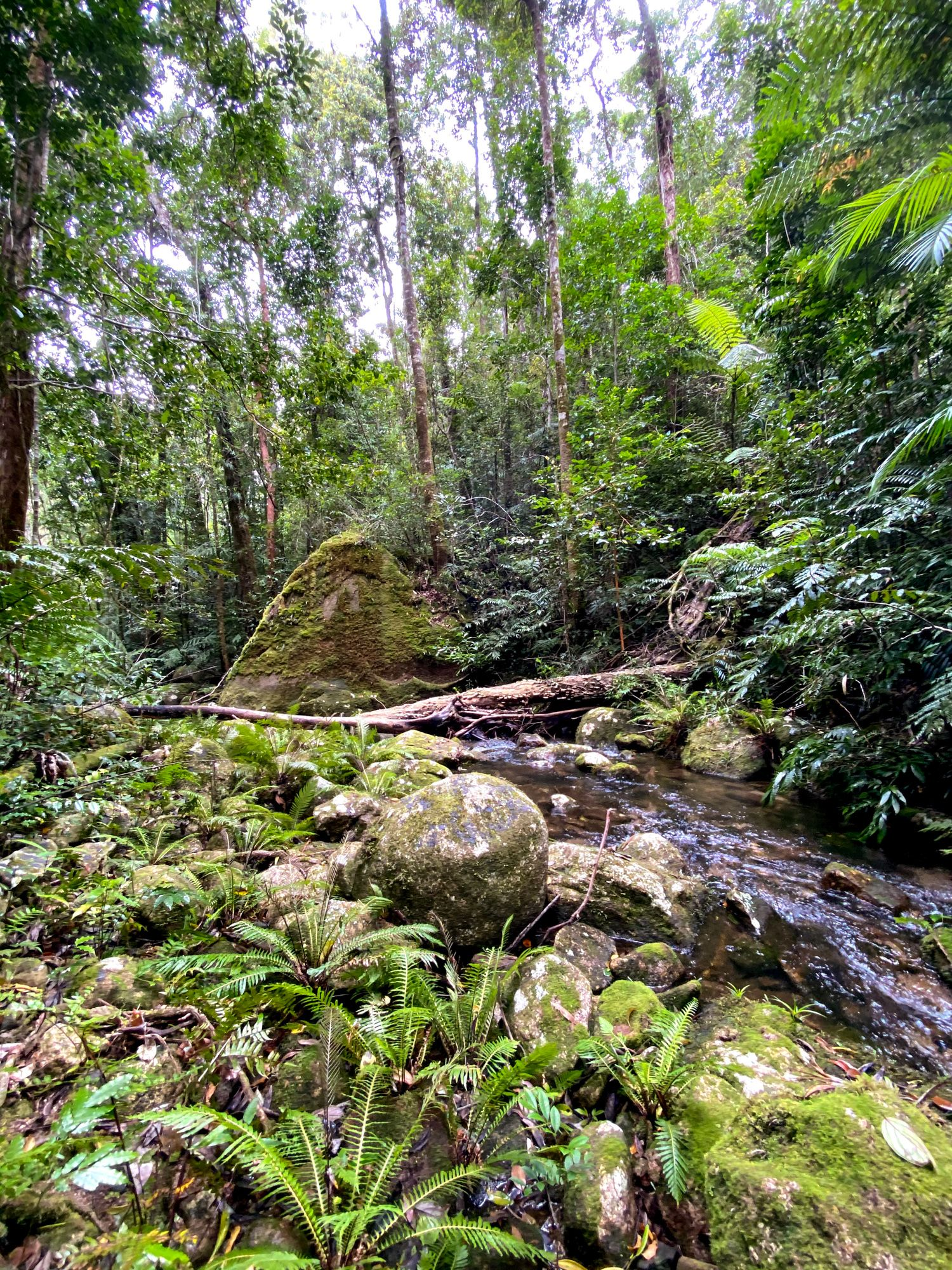 upper double barrel creek ferns