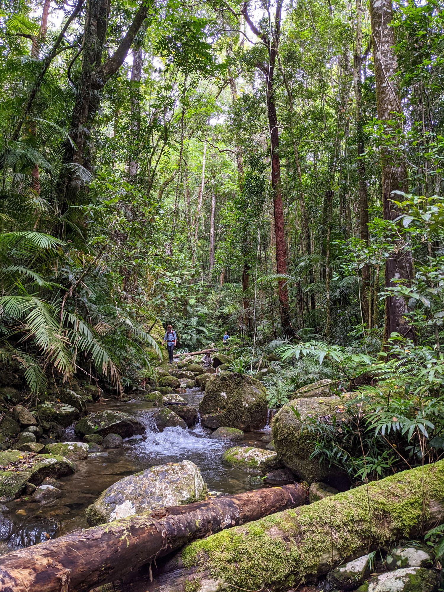 upper double barrel creek rainforest